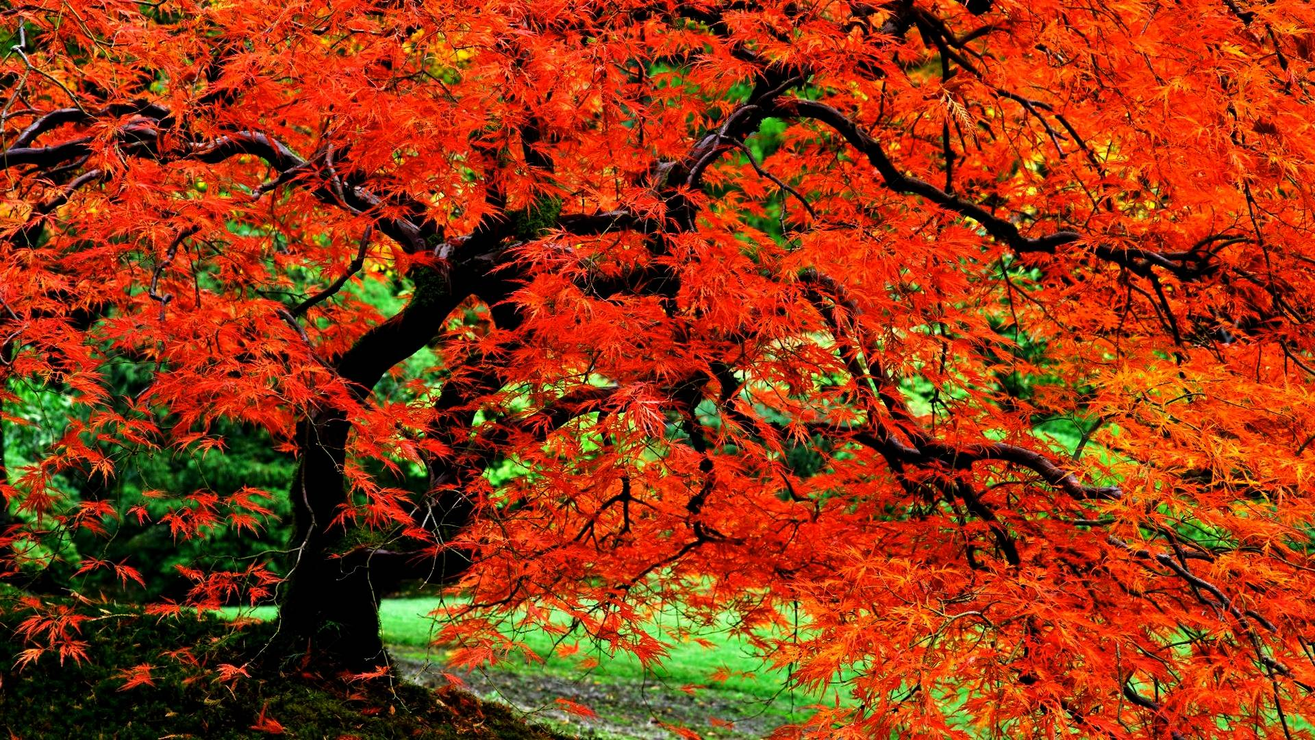 Autumn Tree Wallpaper 61 Images: Autumn Tree Wallpapers