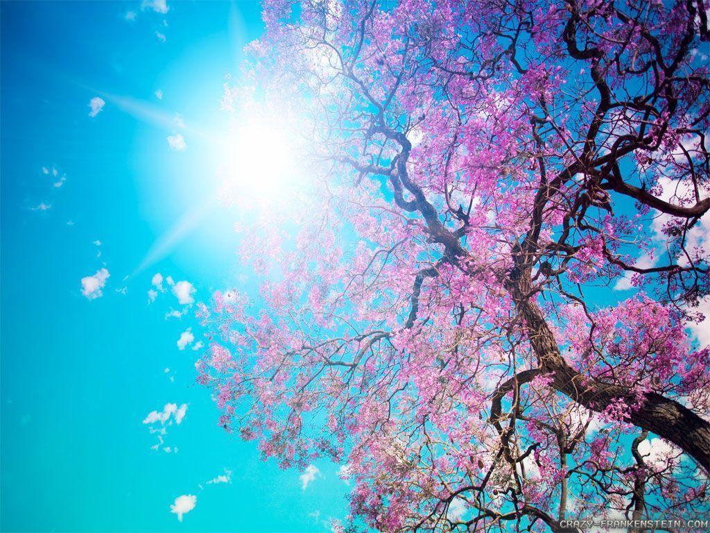 Beautiful Spring Wallpaper