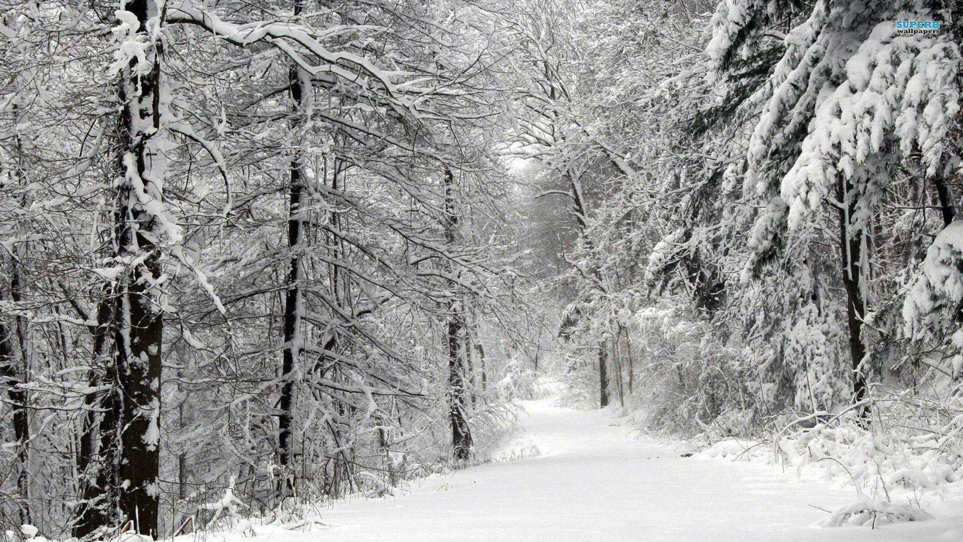 Snow forest wallpapers wallpaper cave - Snowy wallpaper ...