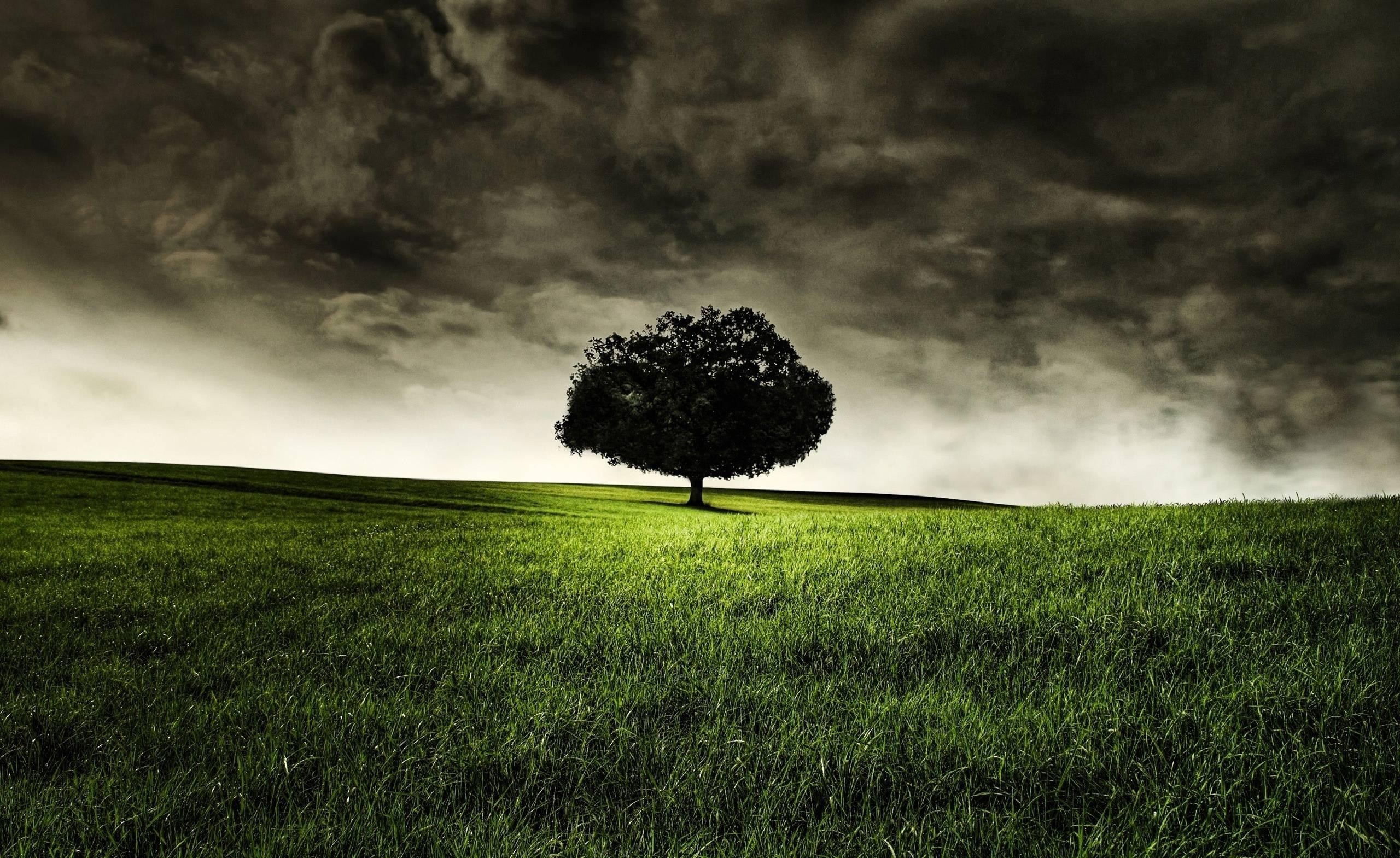 Nature Dark Clouds Grass HD Wallpaper