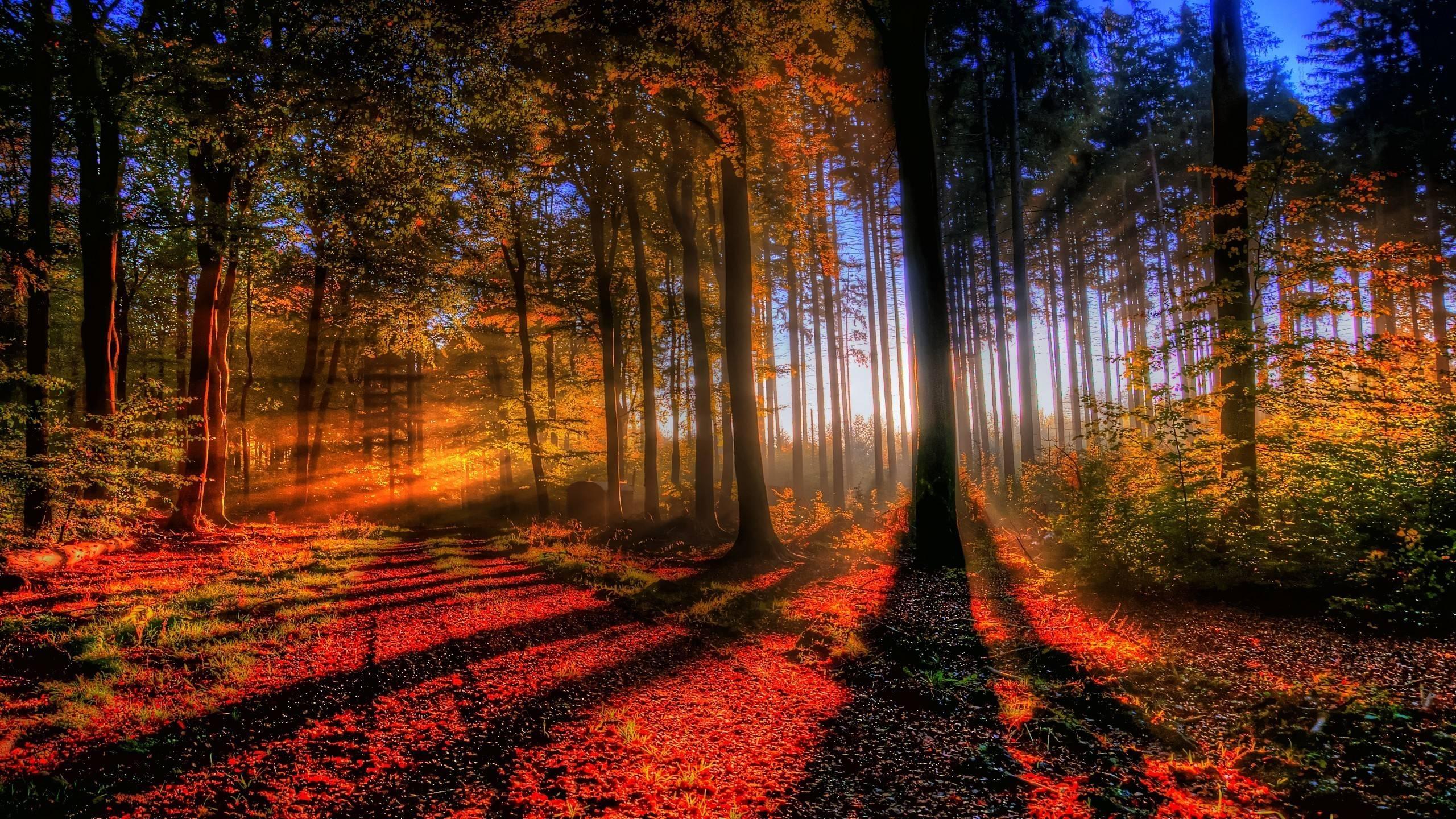 Beauty Fall Season Forest