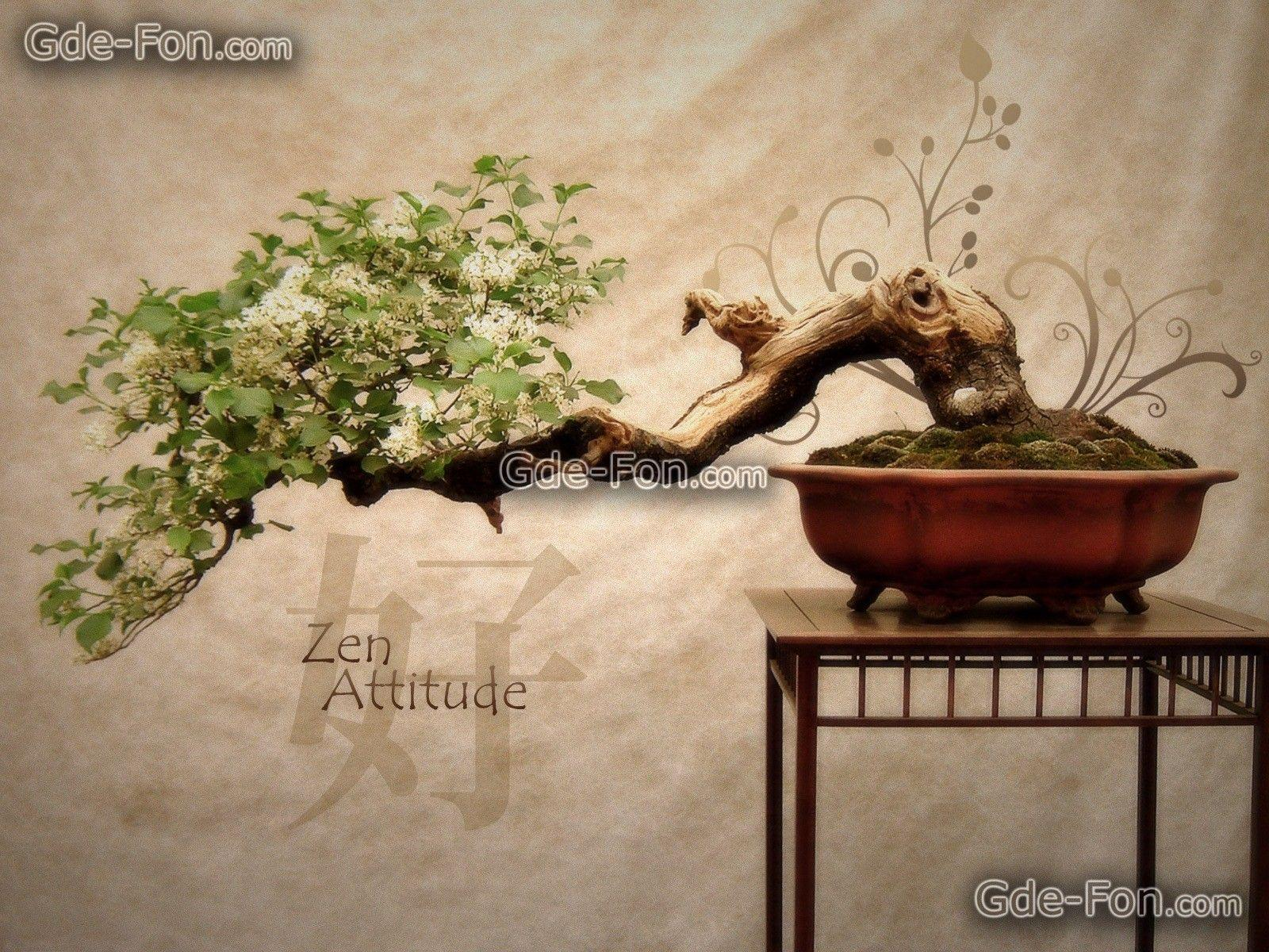 Download wallpaper Bonsai, Japan, tree, Flowers free desktop ...