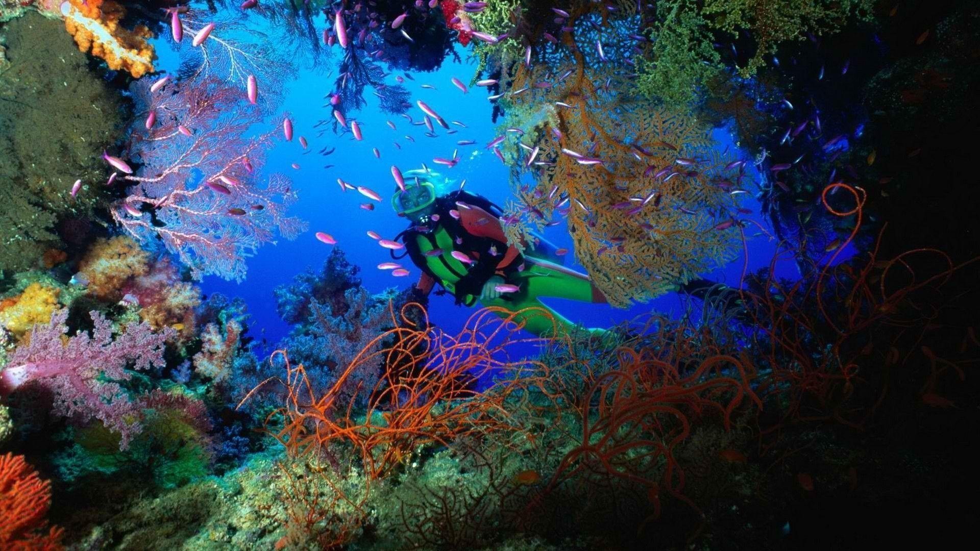 scuba diving wallpaper wallpapers - photo #4