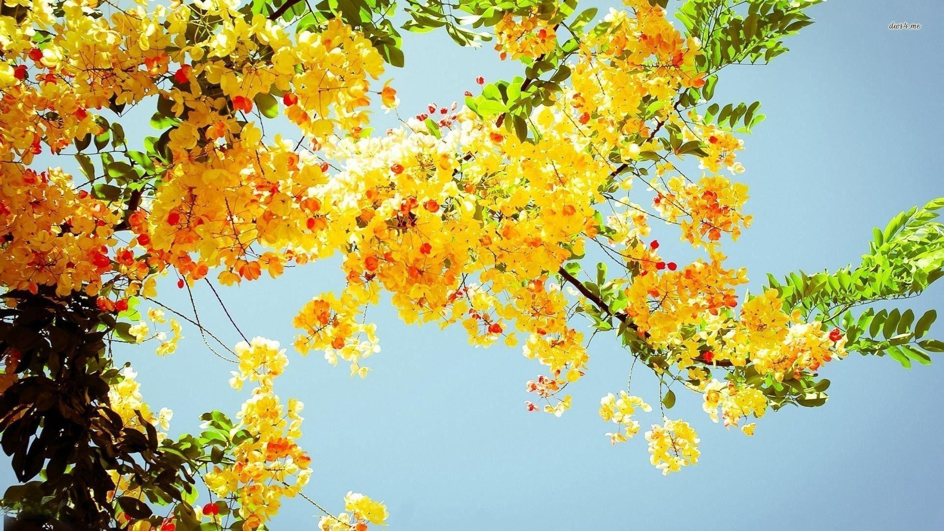 Flower Wallpapers Image - Wallpaper Cave