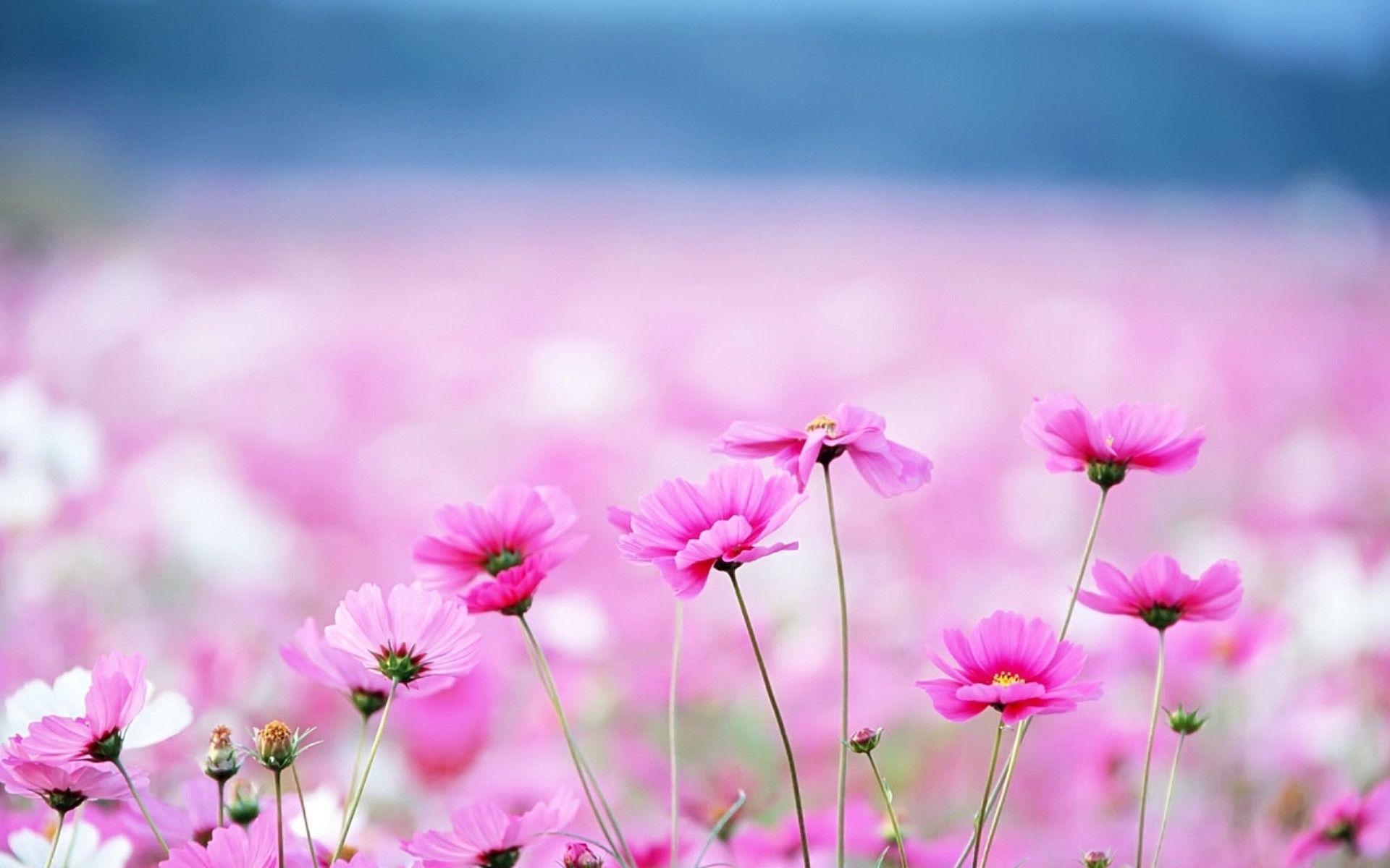 Floral Desktop Background Wallpapers HD