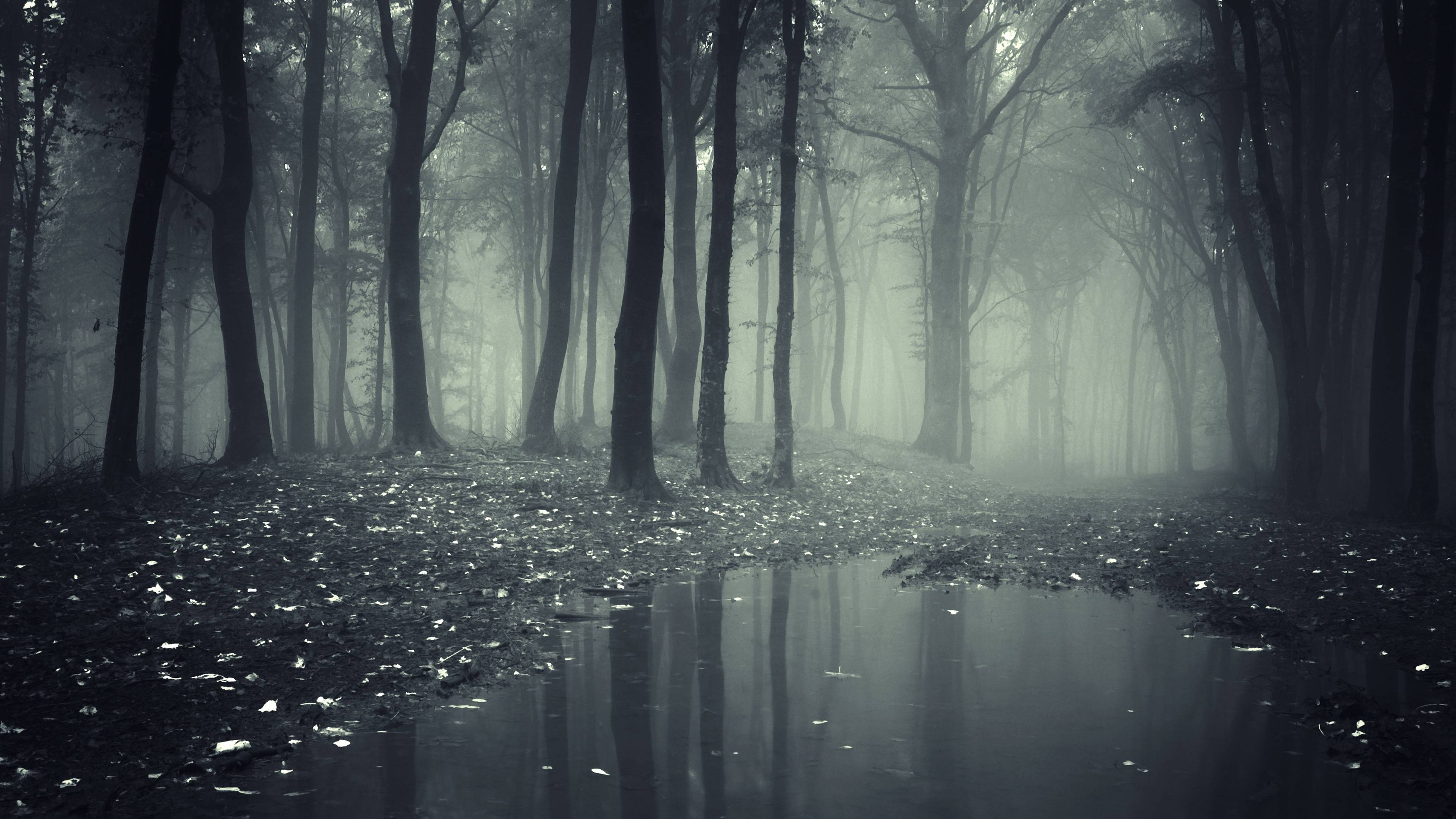Wallpapers For > Dark Forest Background Drawing