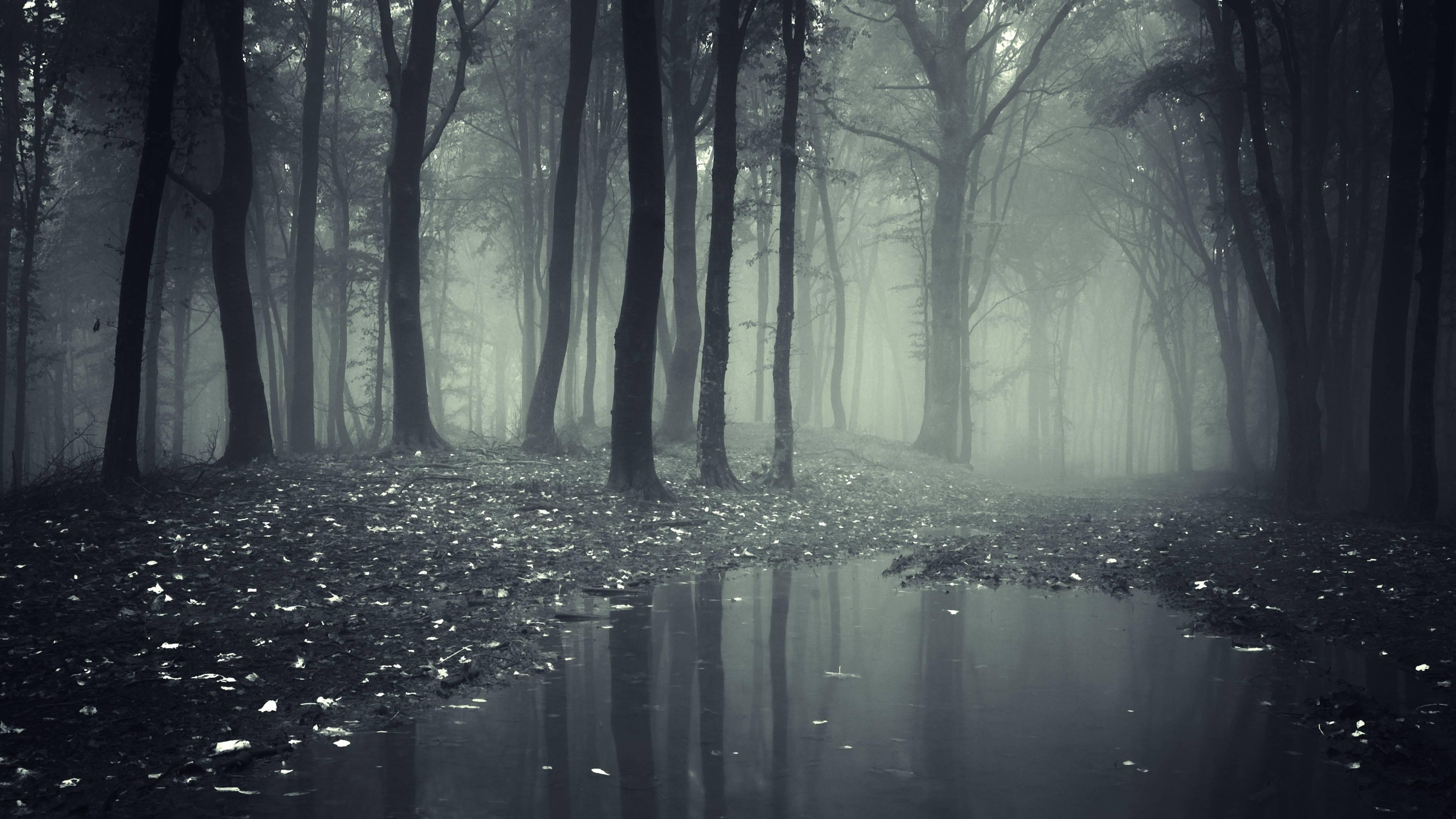 Dark Forest Backgrounds - Wallpaper Cave
