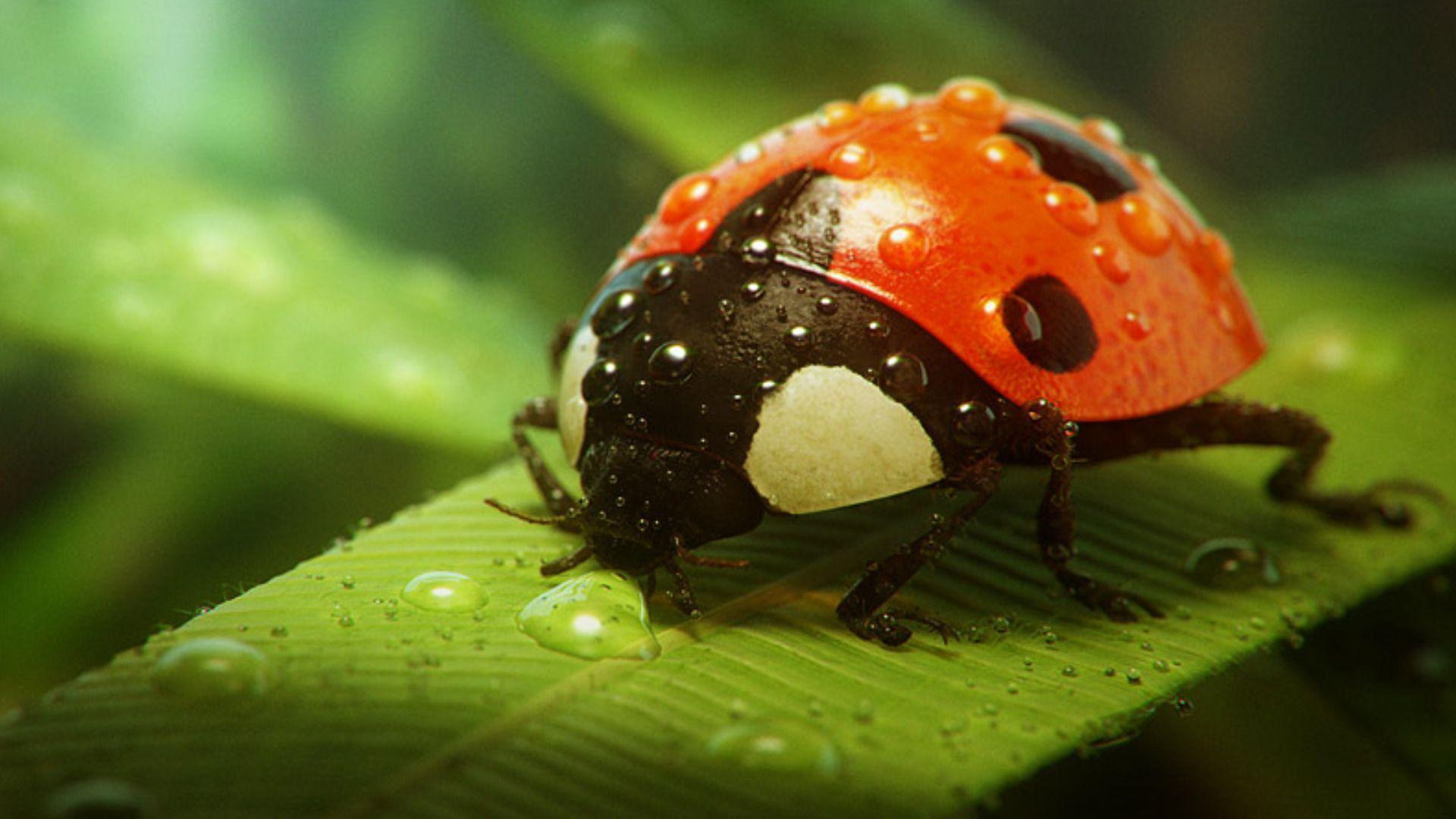 insects ladybirds desktop wallpapers - photo #4