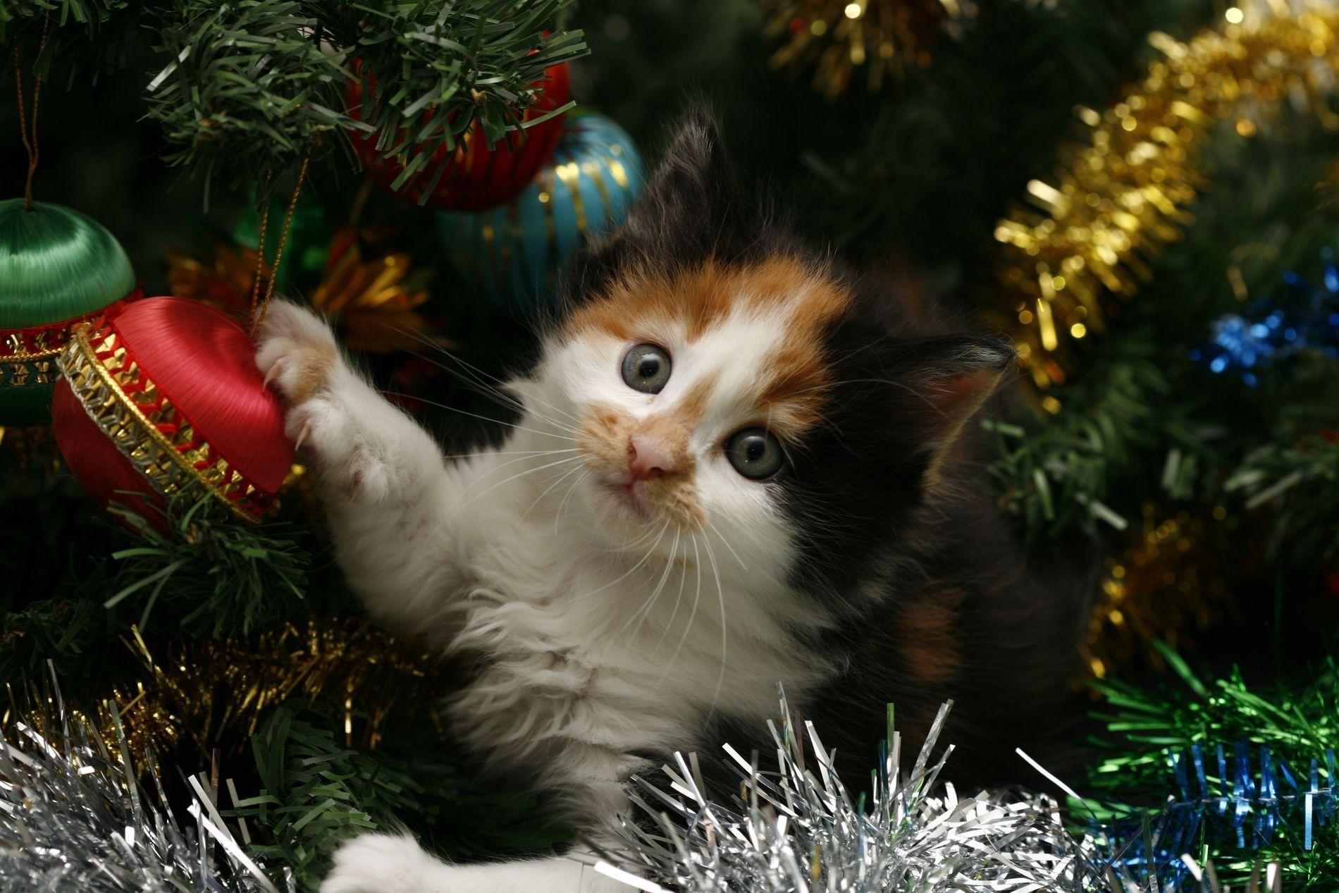 kitten biting everything