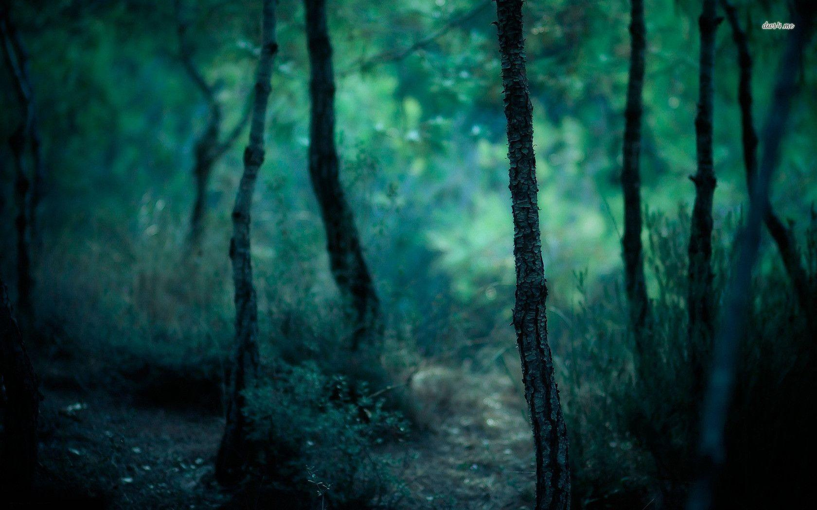 Dark Trees Hd Wallpapers: Dark Forest Wallpapers