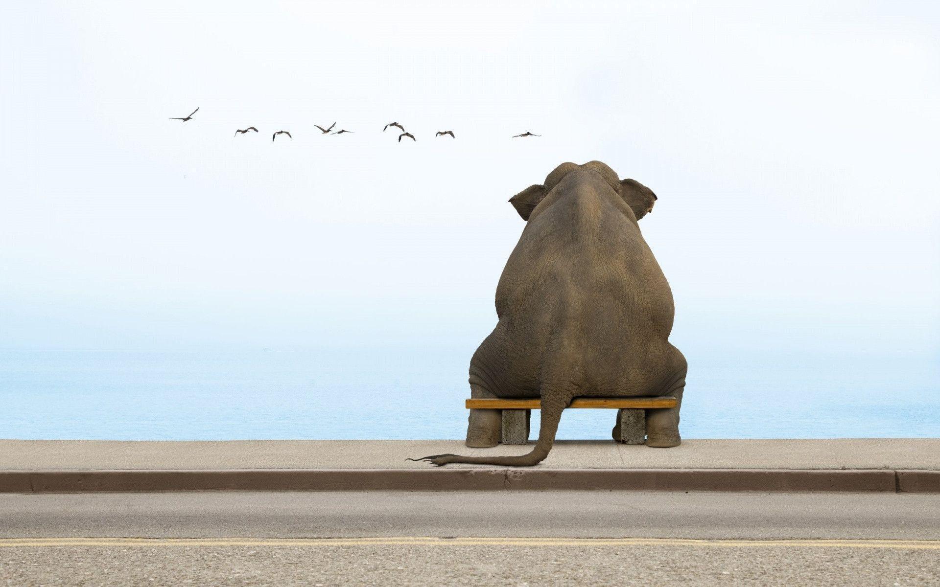 1920x1200 Sitting Elephant Wallpaper