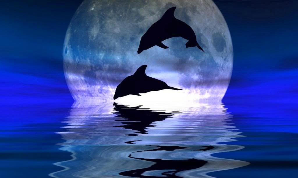dolphin backgrounds wallpaper cave