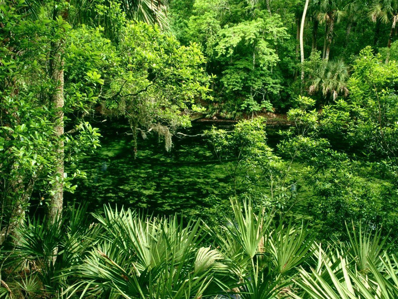 tropical jungle wallpaper - photo #11