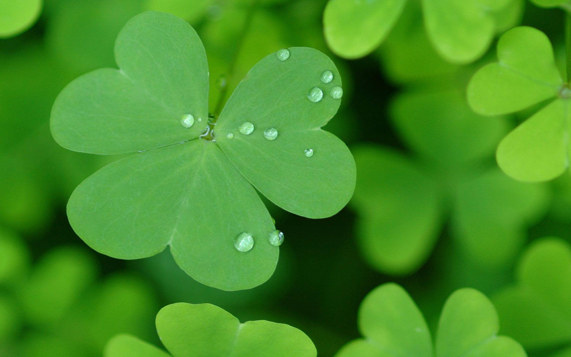patricks day shamrock background - photo #22
