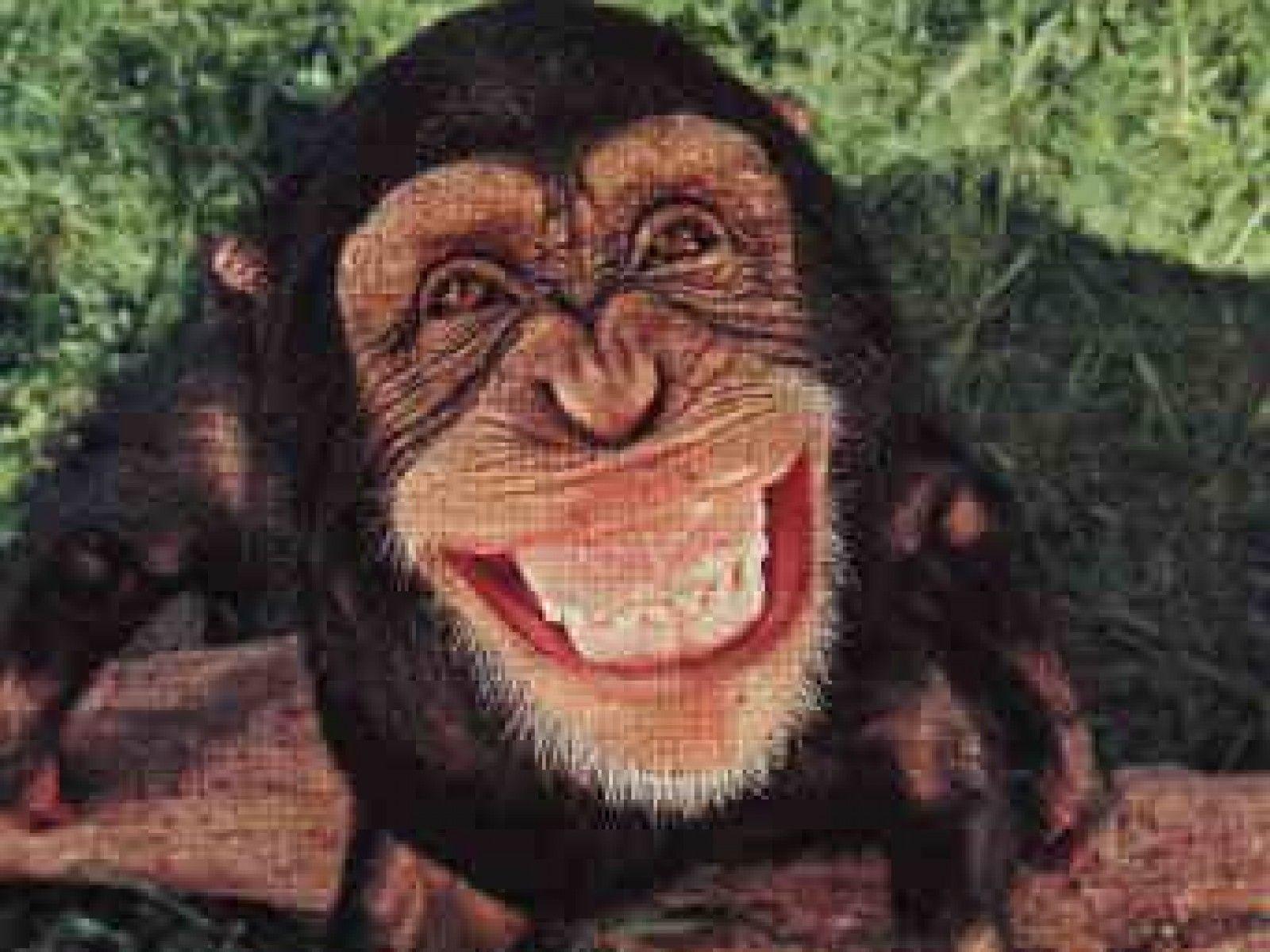 Baby Monkey Wallpaper 4 - Animal Backgrounds