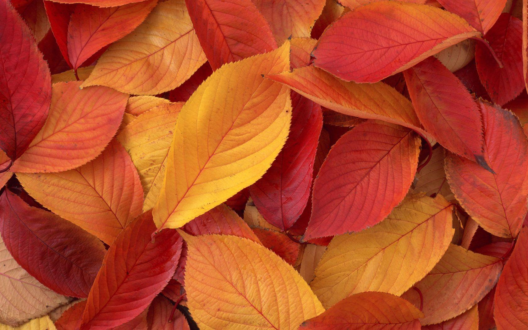 leaf background wallpaper - photo #40