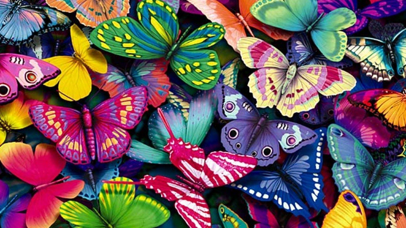 butterfly hq wallpaper 1024x768 - photo #16