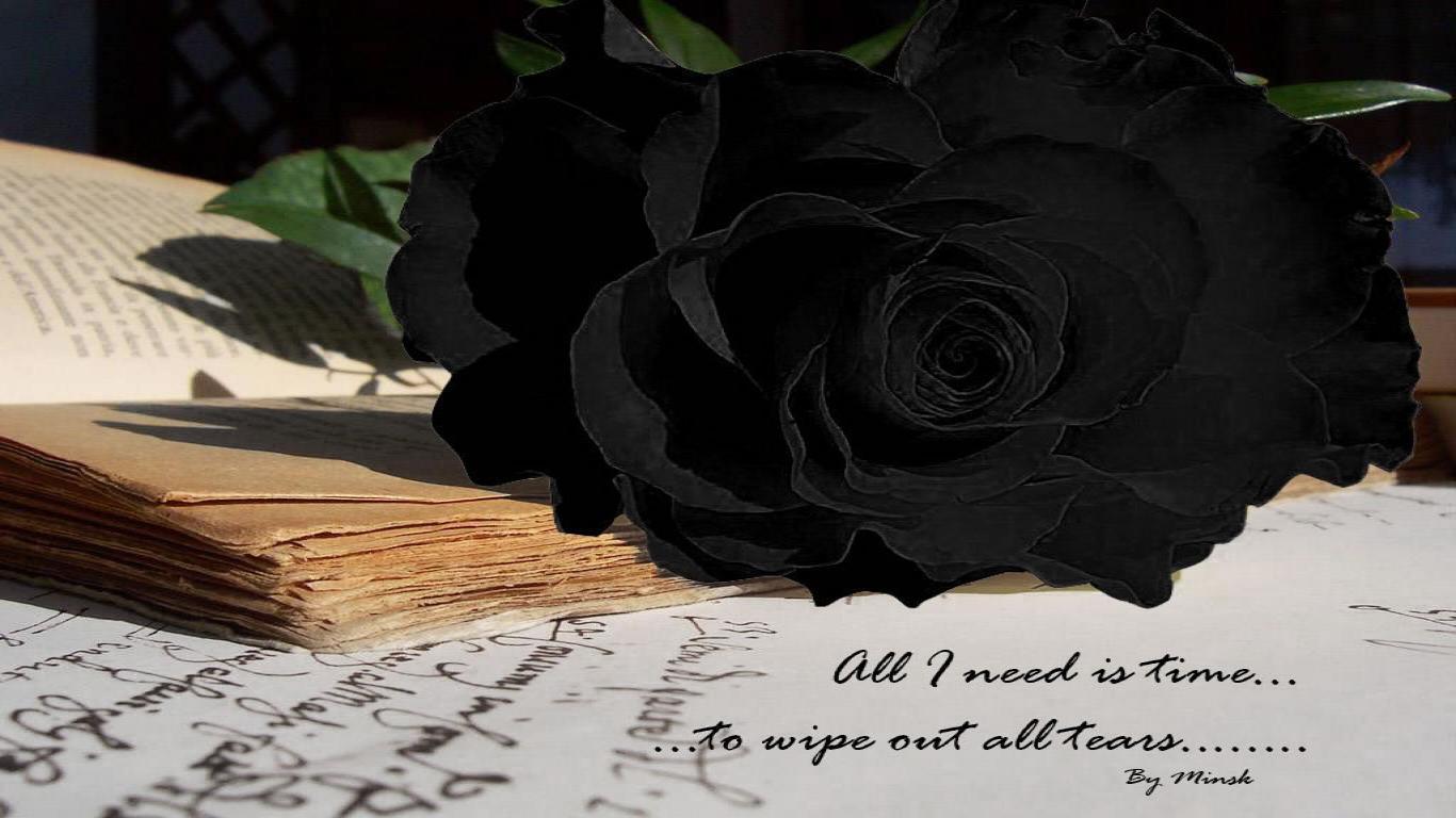 wallpapers black rose wallpaper cave
