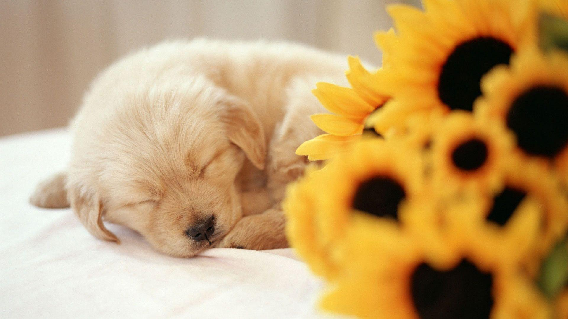 Spring Desktop Backgrounds with Puppies, wallpaper, Spring Desktop ...