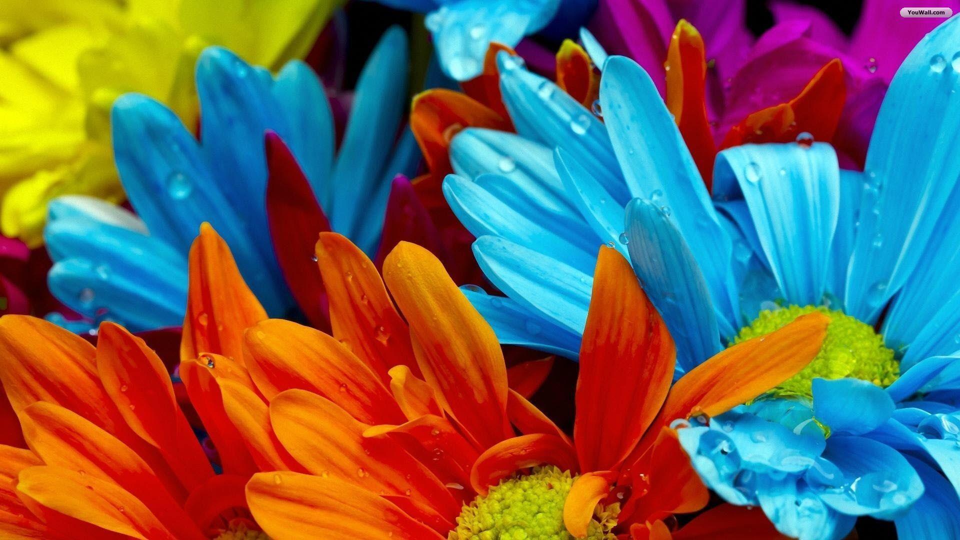 Colorful Summer Desktop Backgrounds: Summer Flowers Wallpapers