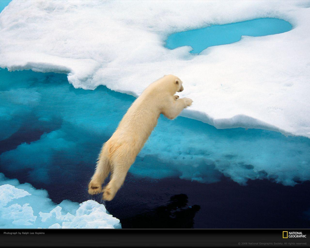 Wallpaper download national geographic - Polar Bear Photo Life In Color Blue Wallpaper Download Photos