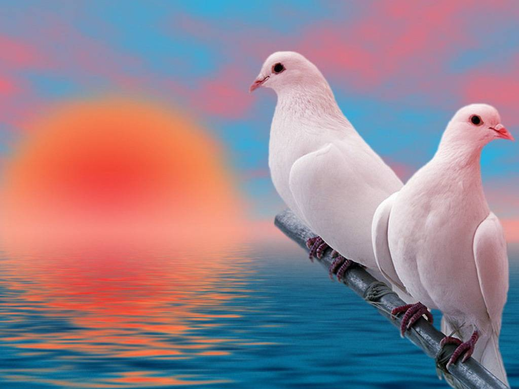 Love Birds Wallpaper For Mobile : Love Bird Wallpapers - Wallpaper cave