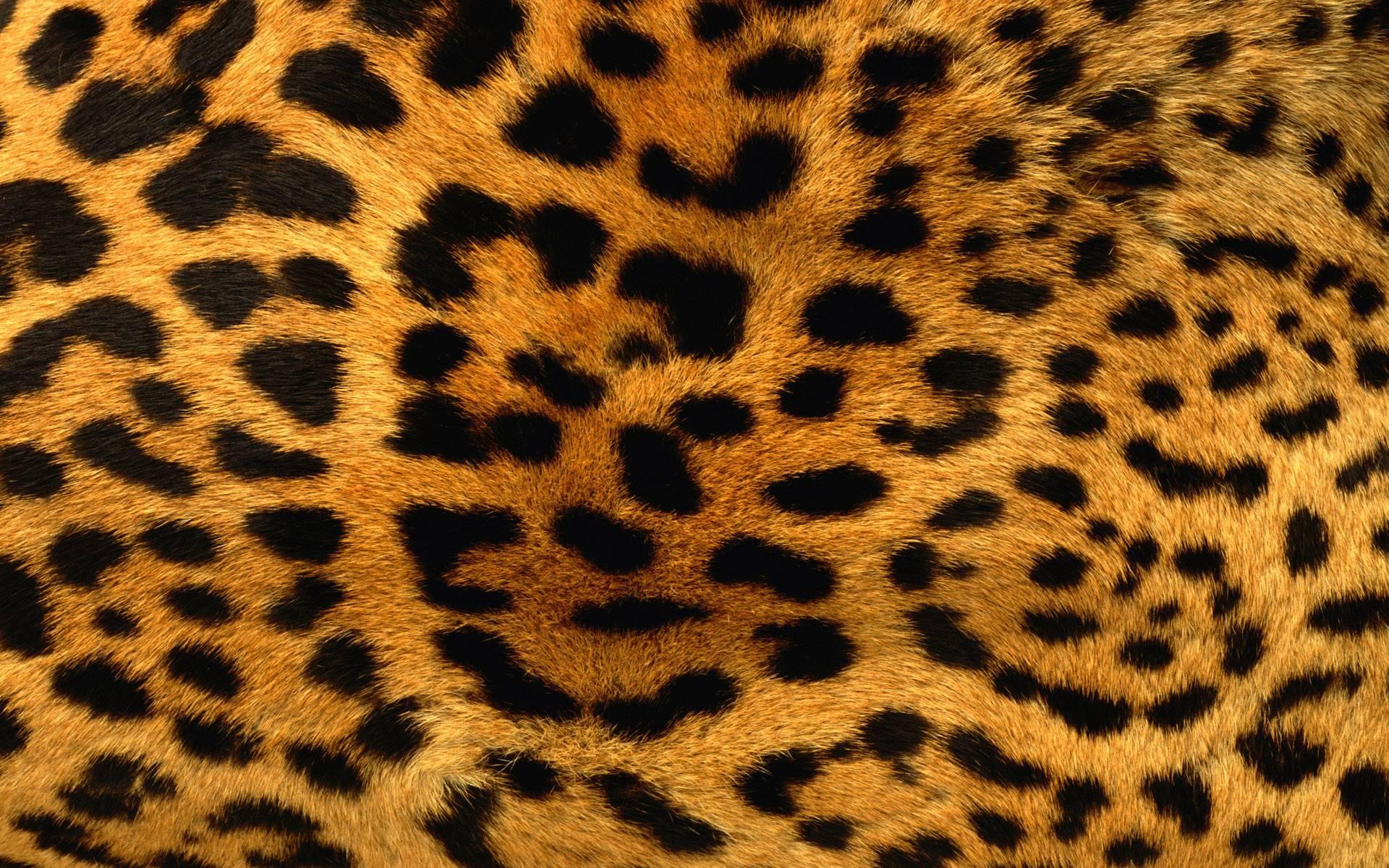 Free Furry Leopard Print Wallpapers, Free Furry Leopard Print HD .