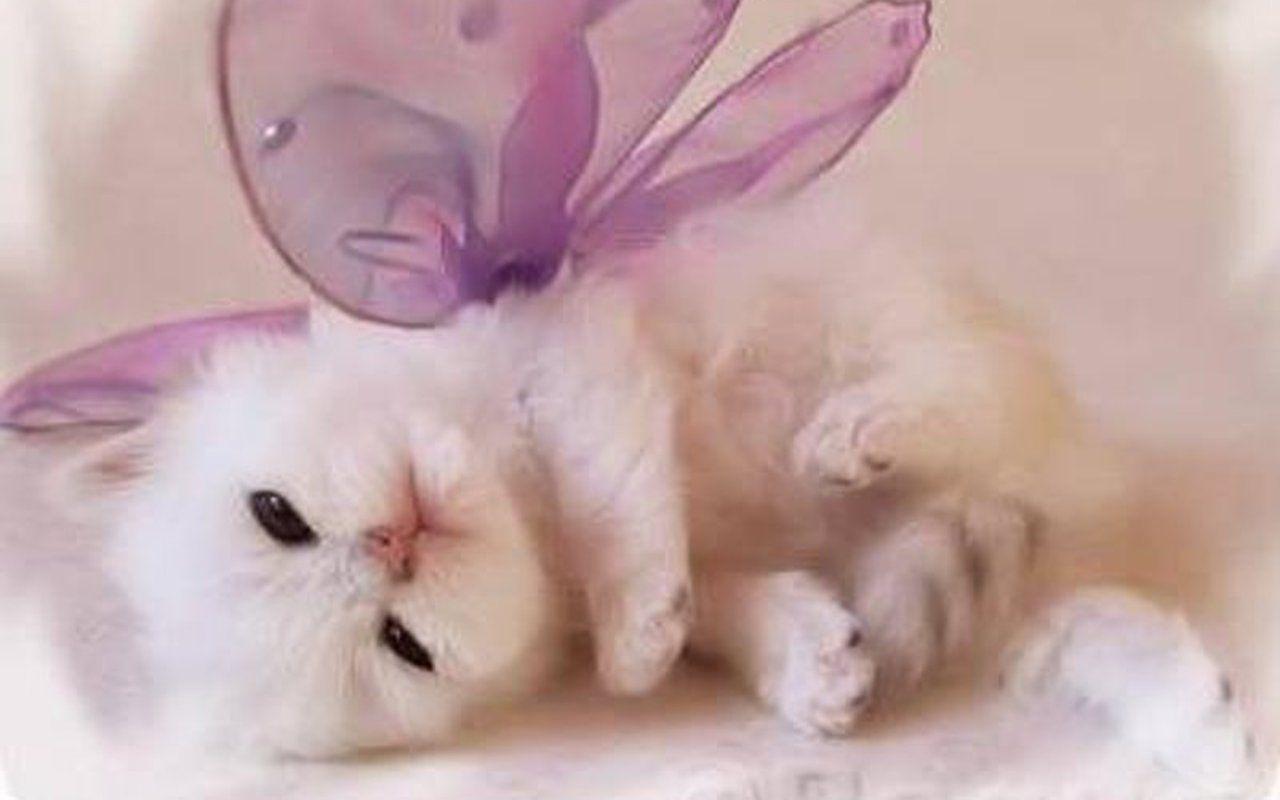 Cute Kitten Wallpapers Wallpaper Cave