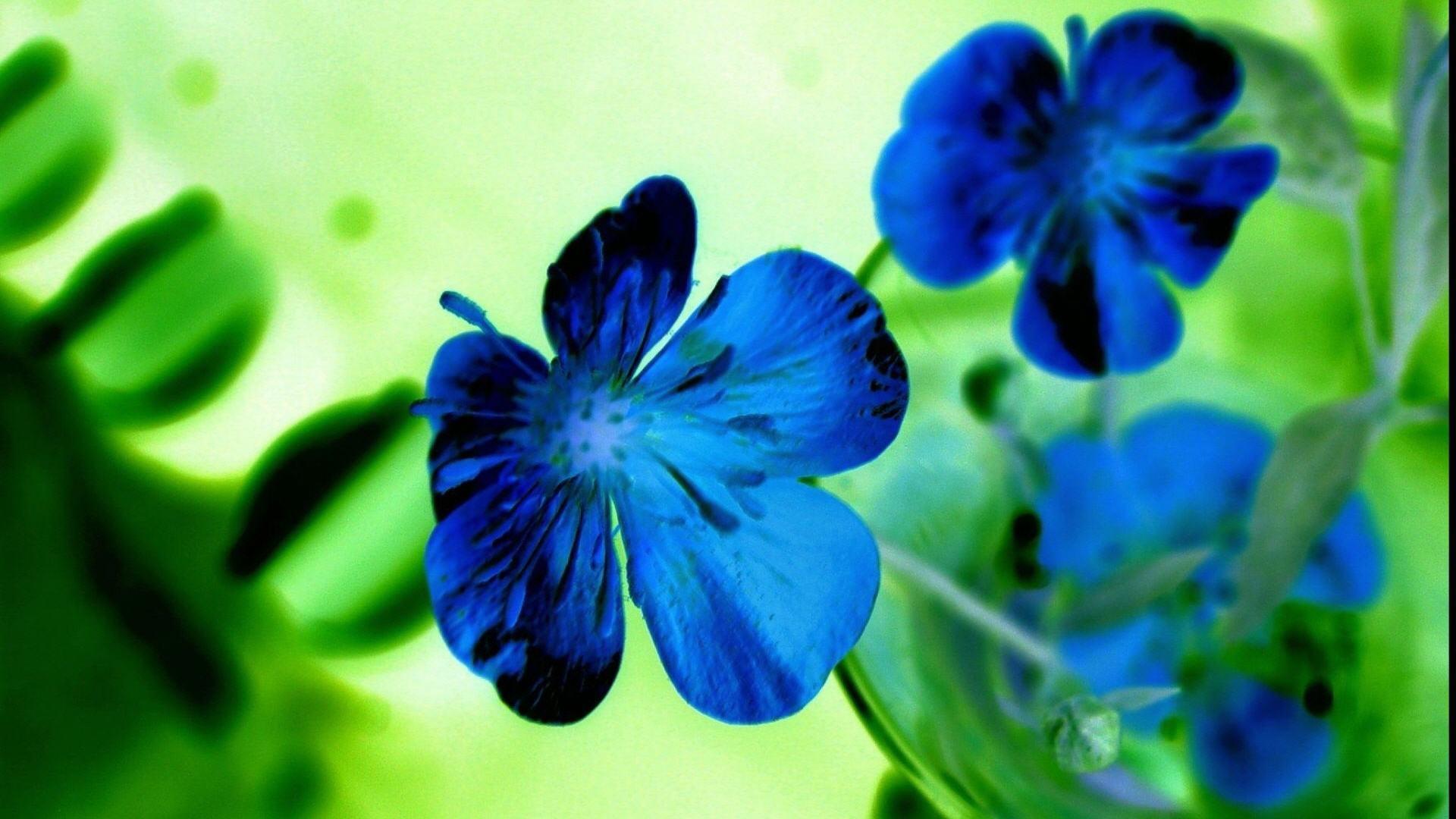 Flowers Blue HD Wallpapers - HD Wallpapers Inn
