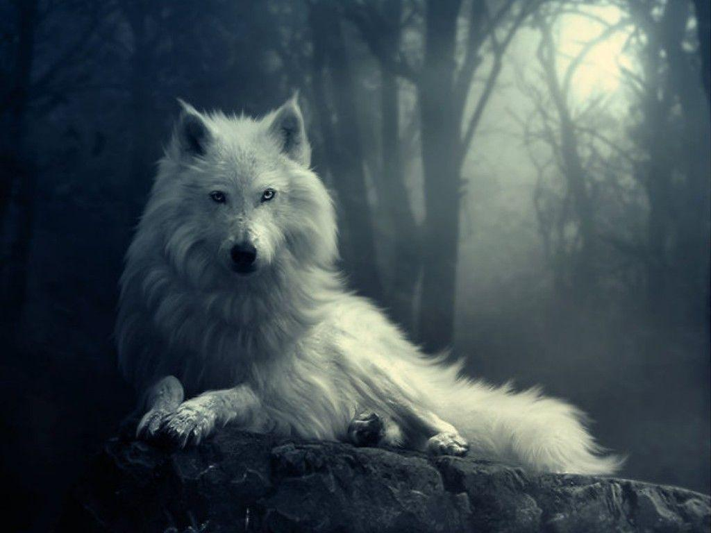 Wallpapers For > White Wolf Wallpapers