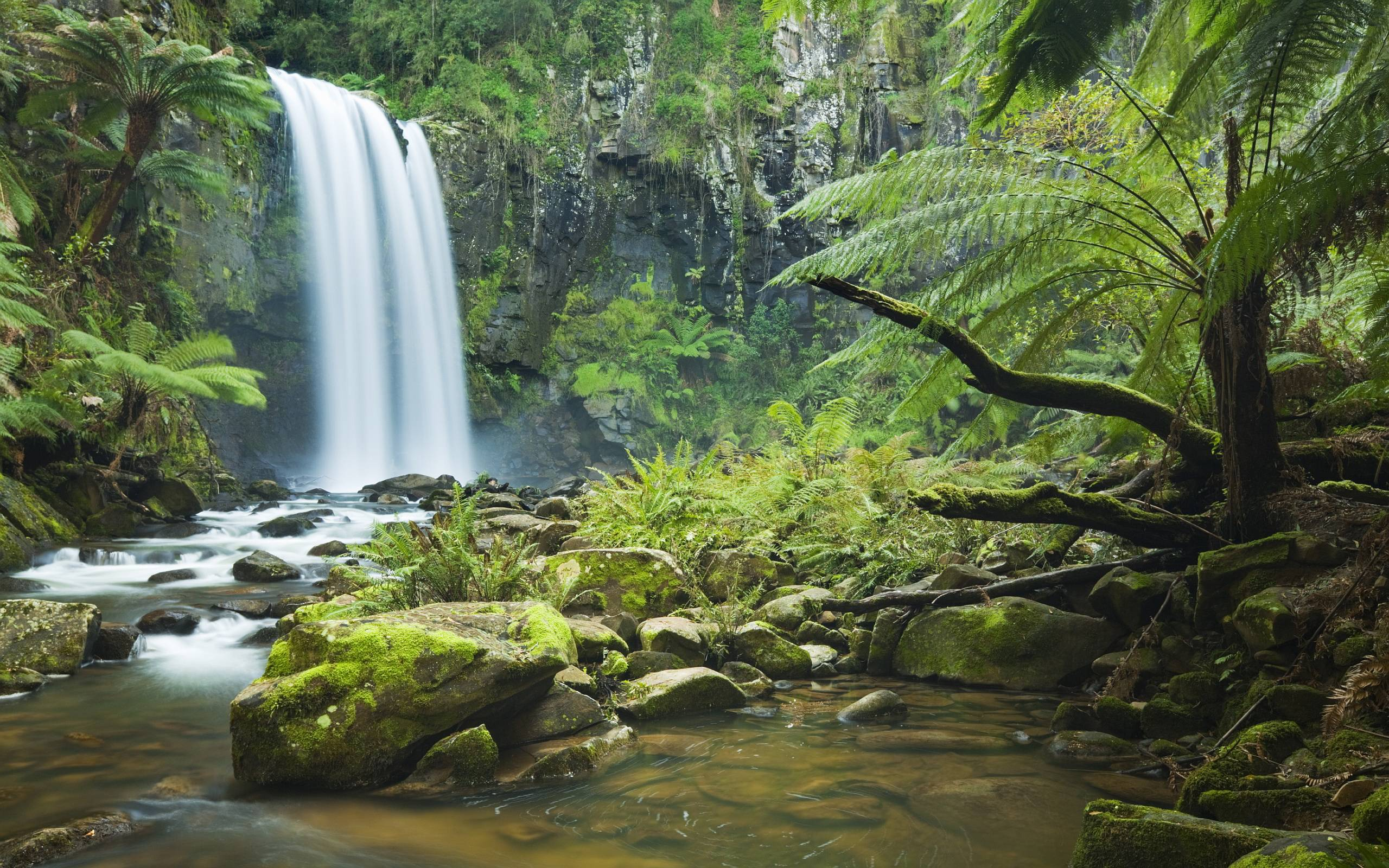 Rain Forest Backgrounds - Wallpaper Cave