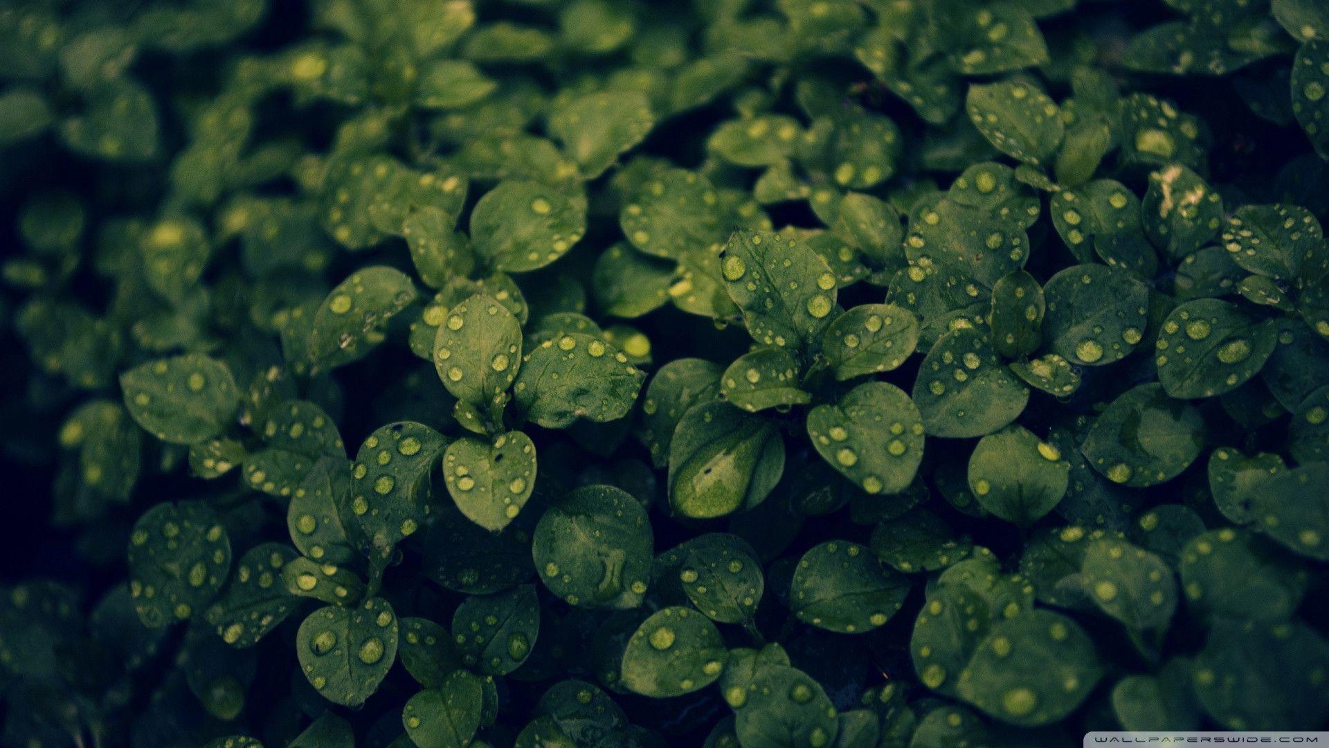 green plant desktop - photo #7