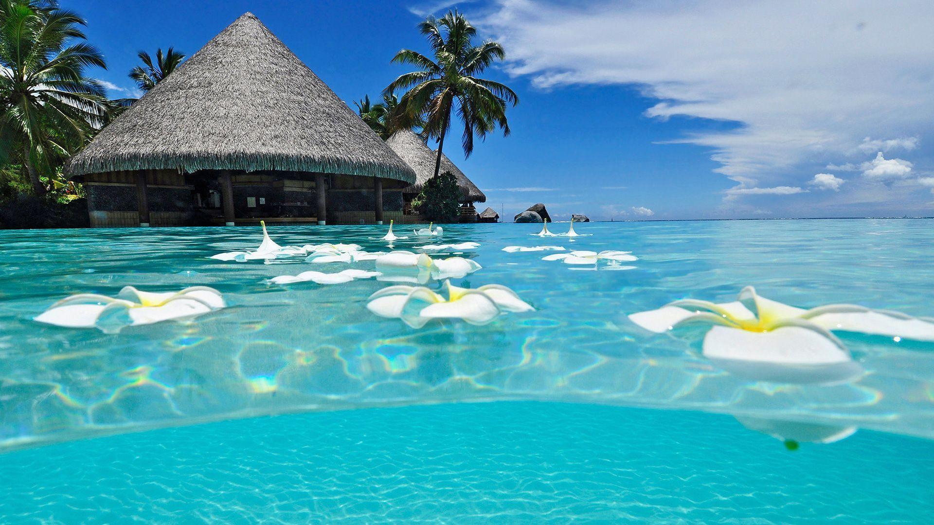 beach paradise beaches - photo #3