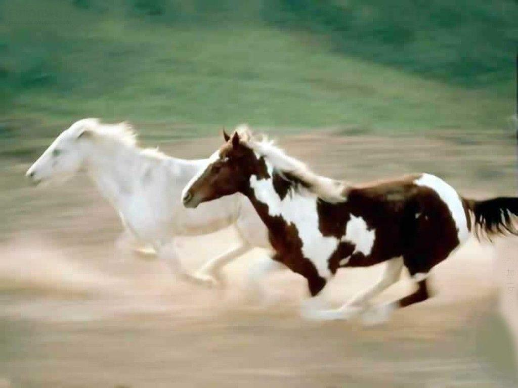 free horse screensavers and - photo #28