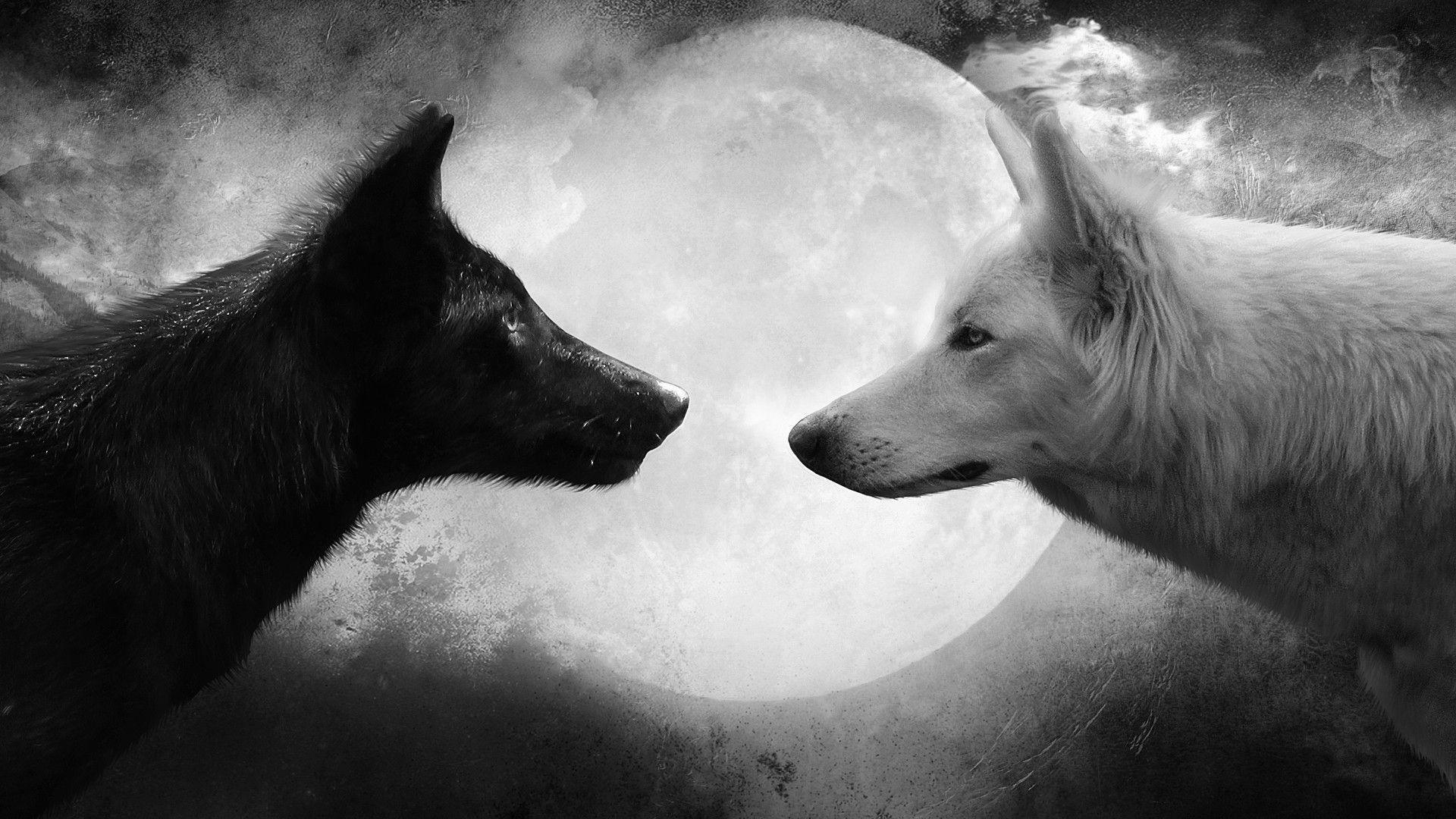 Animals For > Wolf Love Wallpapers