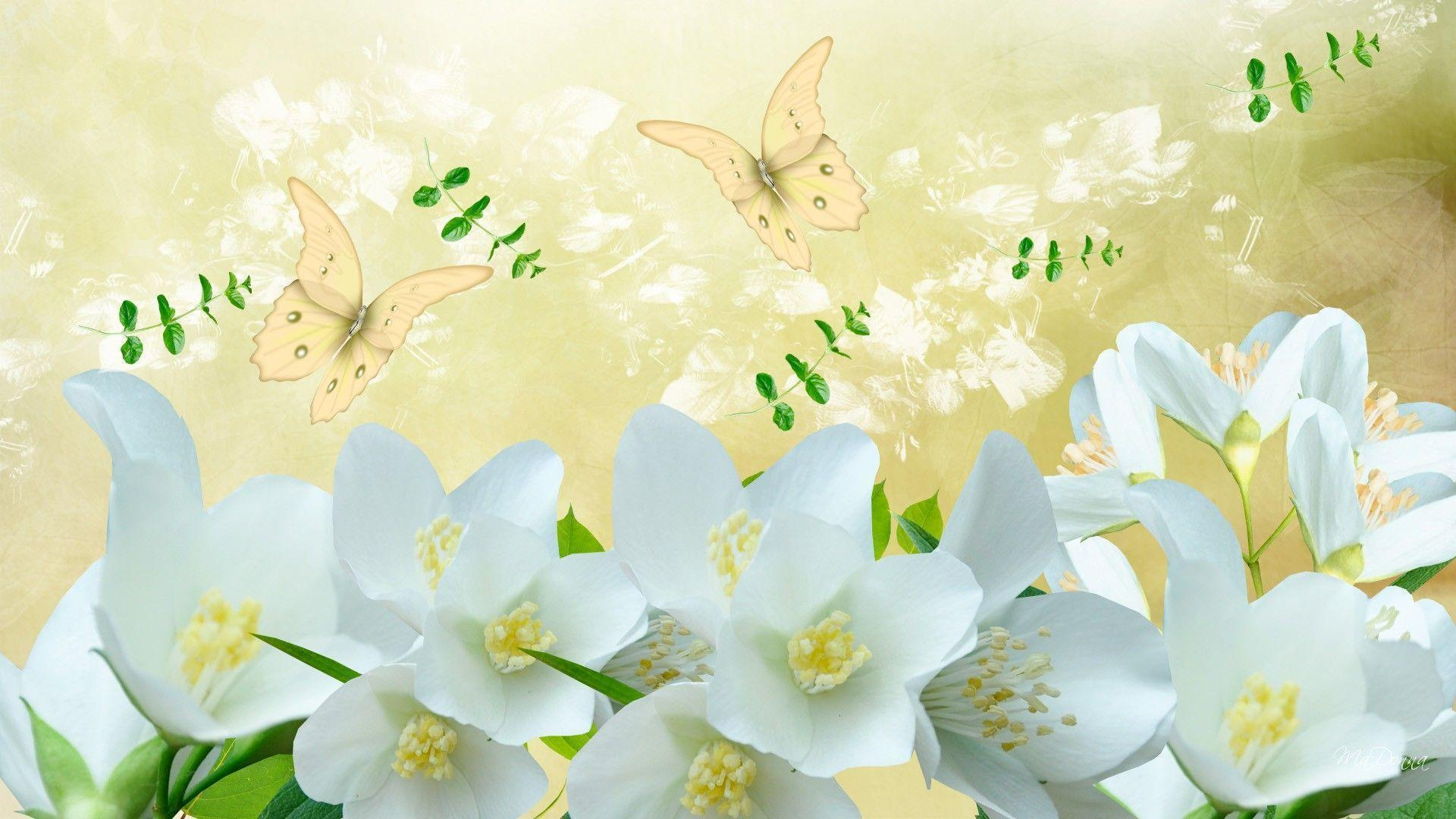 Jasmine flower wallpapers