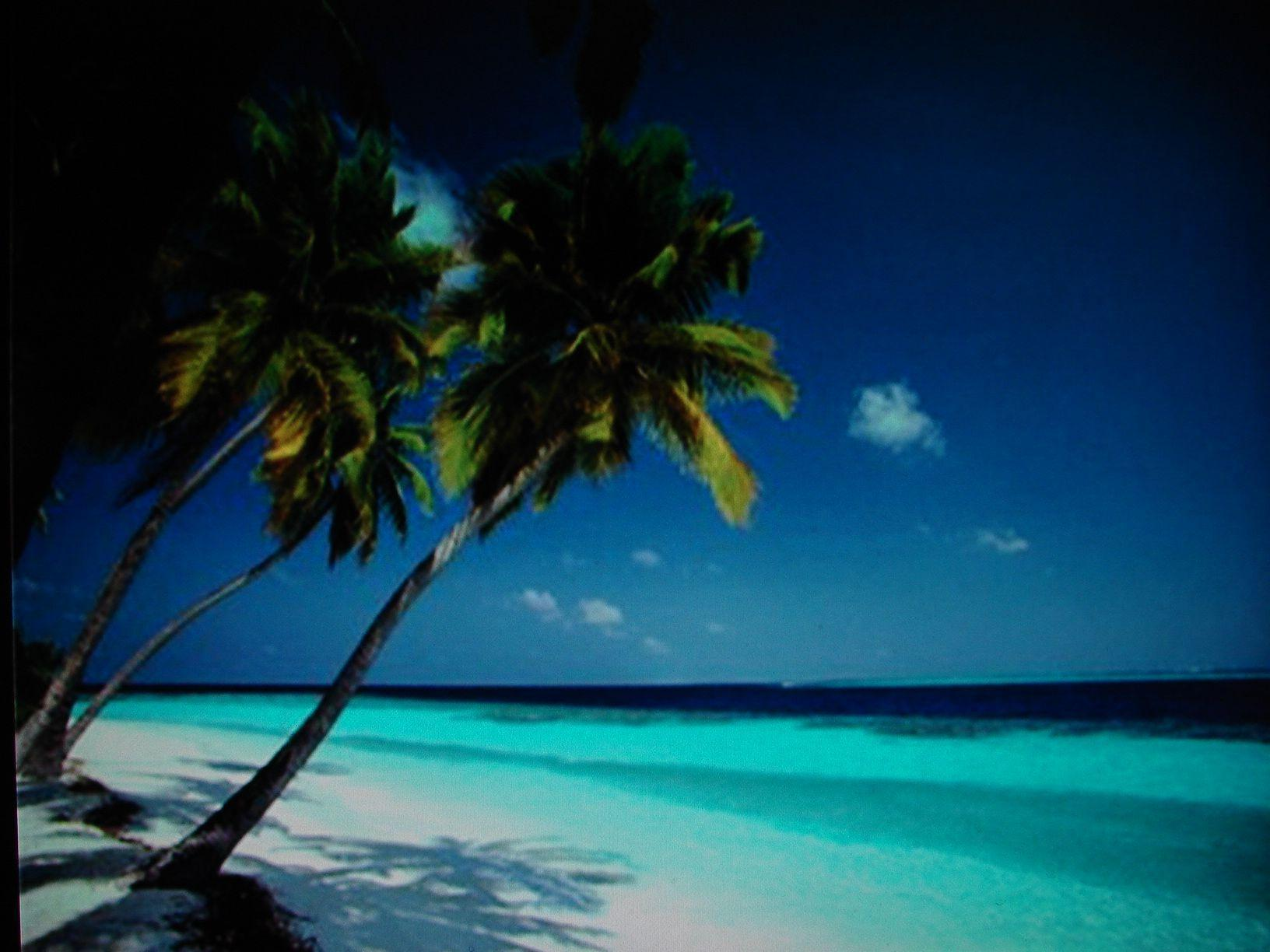Free Caribbean Beach Wallpapers
