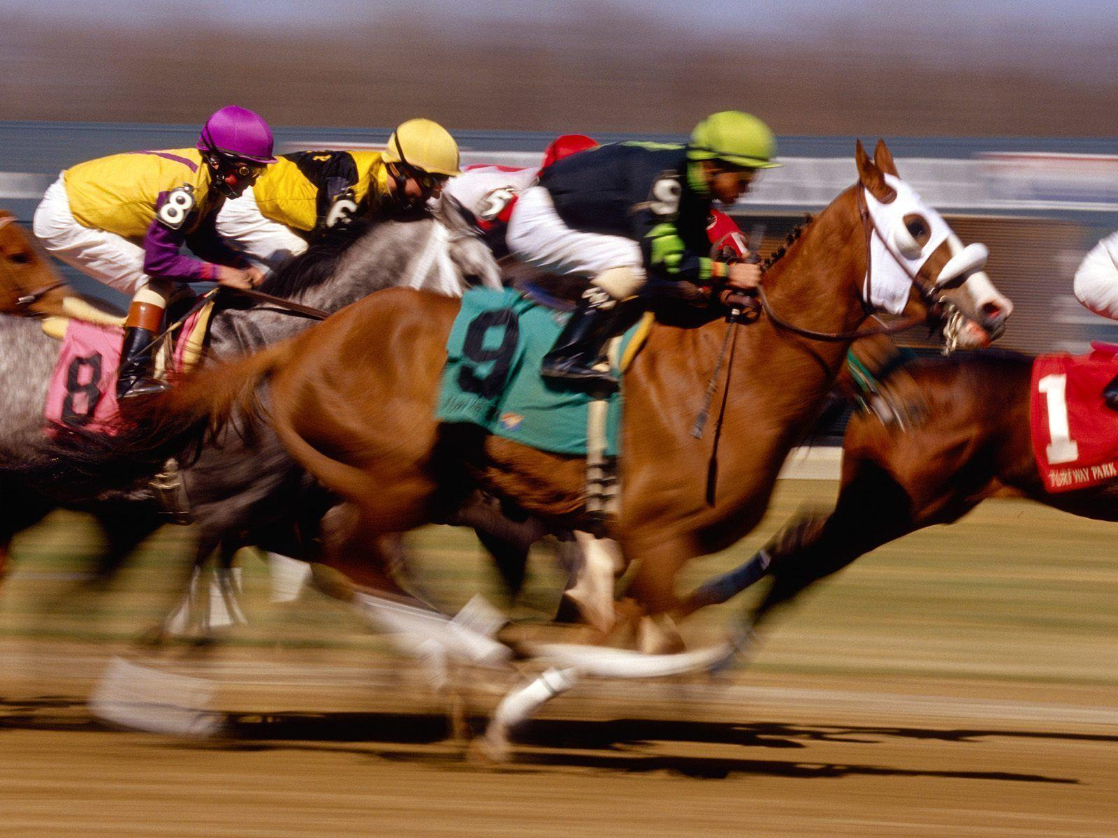 Animals For > Horse Racing Wallpapers Screensaver