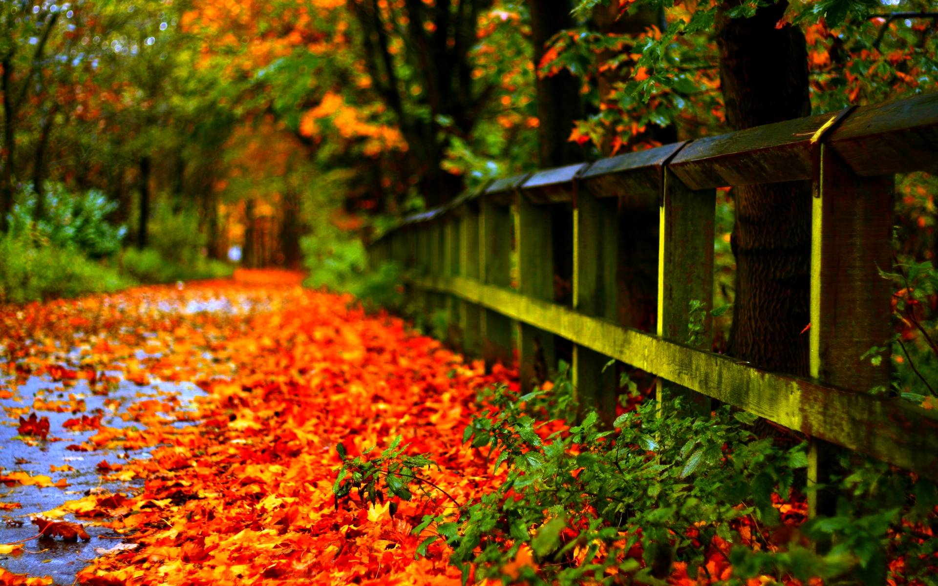 Wallpapers Autumn Leaves