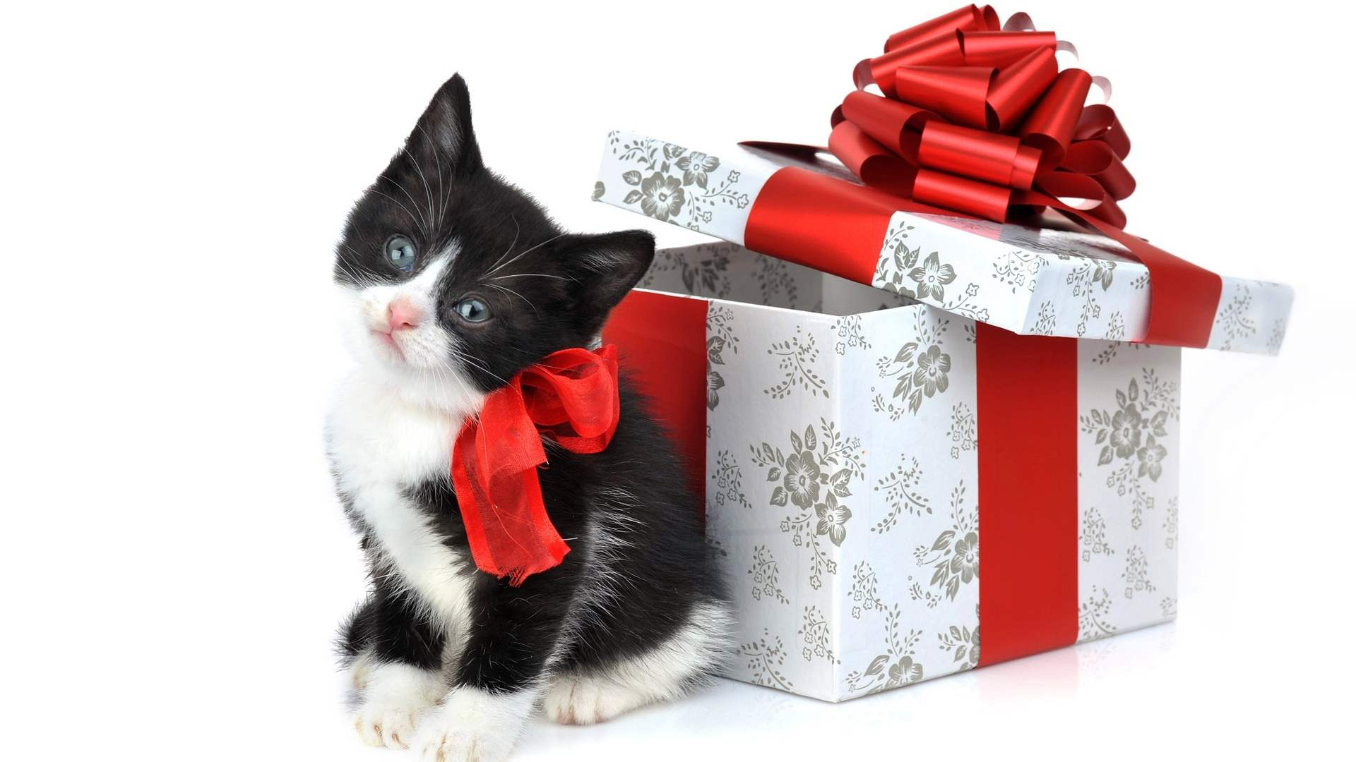 Christmas Kitten Wallpaper - Viewing Gallery
