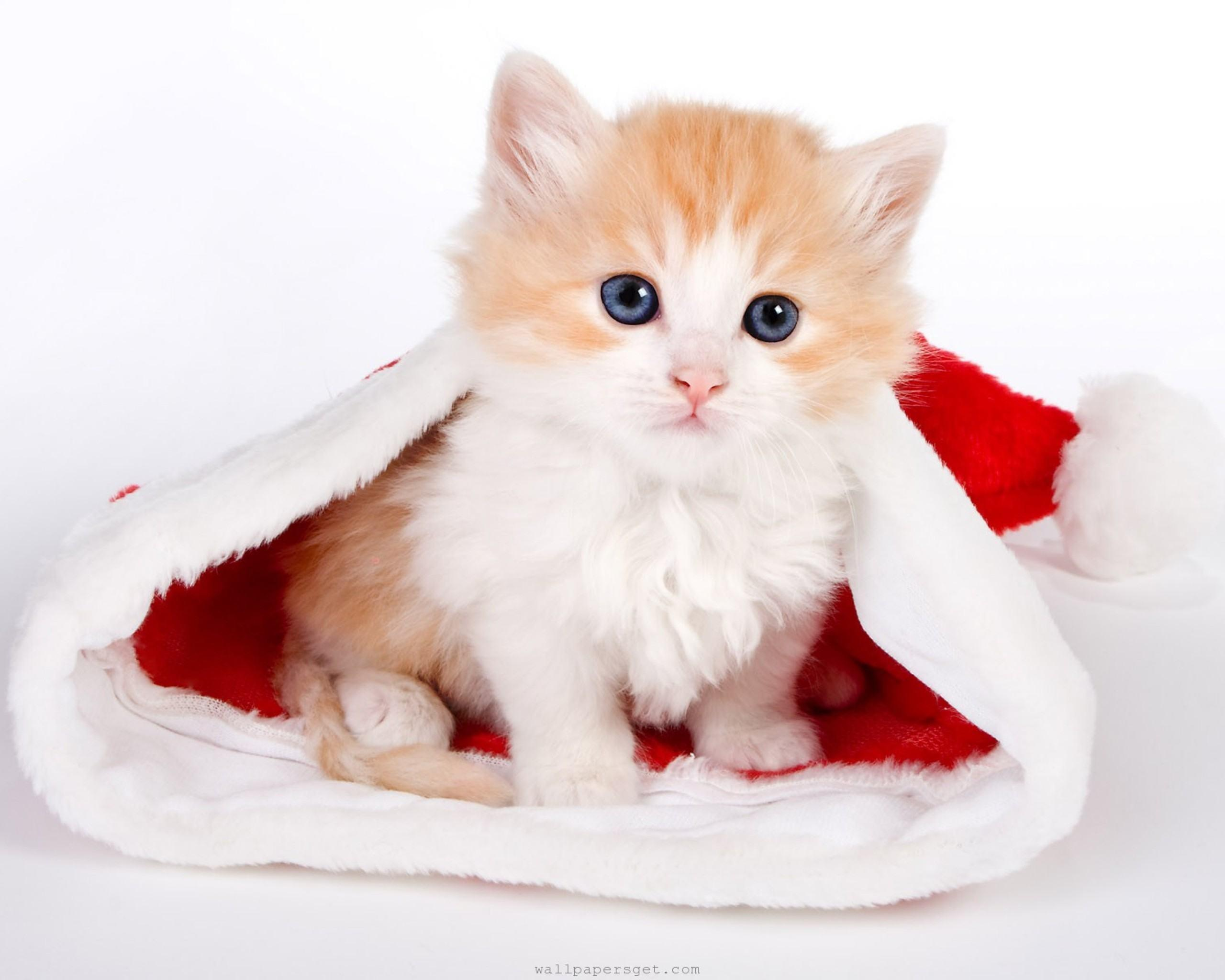 Funny Cat Animal Love Cute Precious Hd Wallpapers