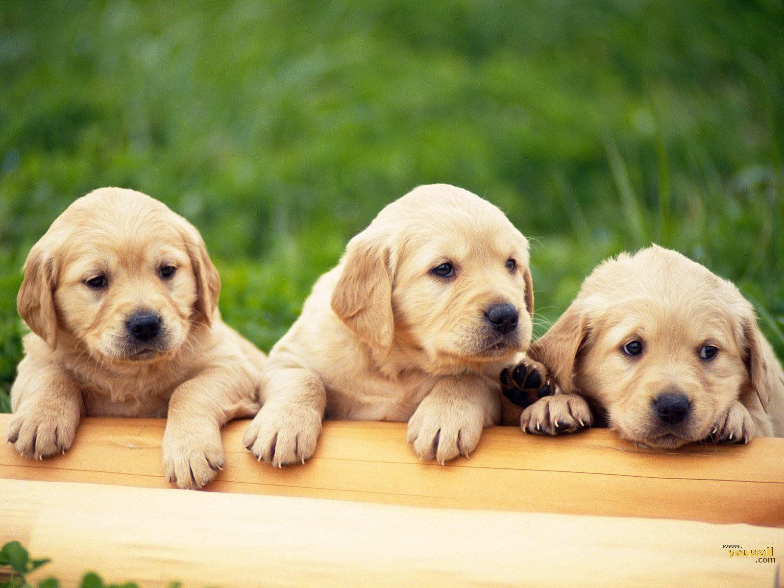 Animals For > Cute Dog Backgrounds For Desktop