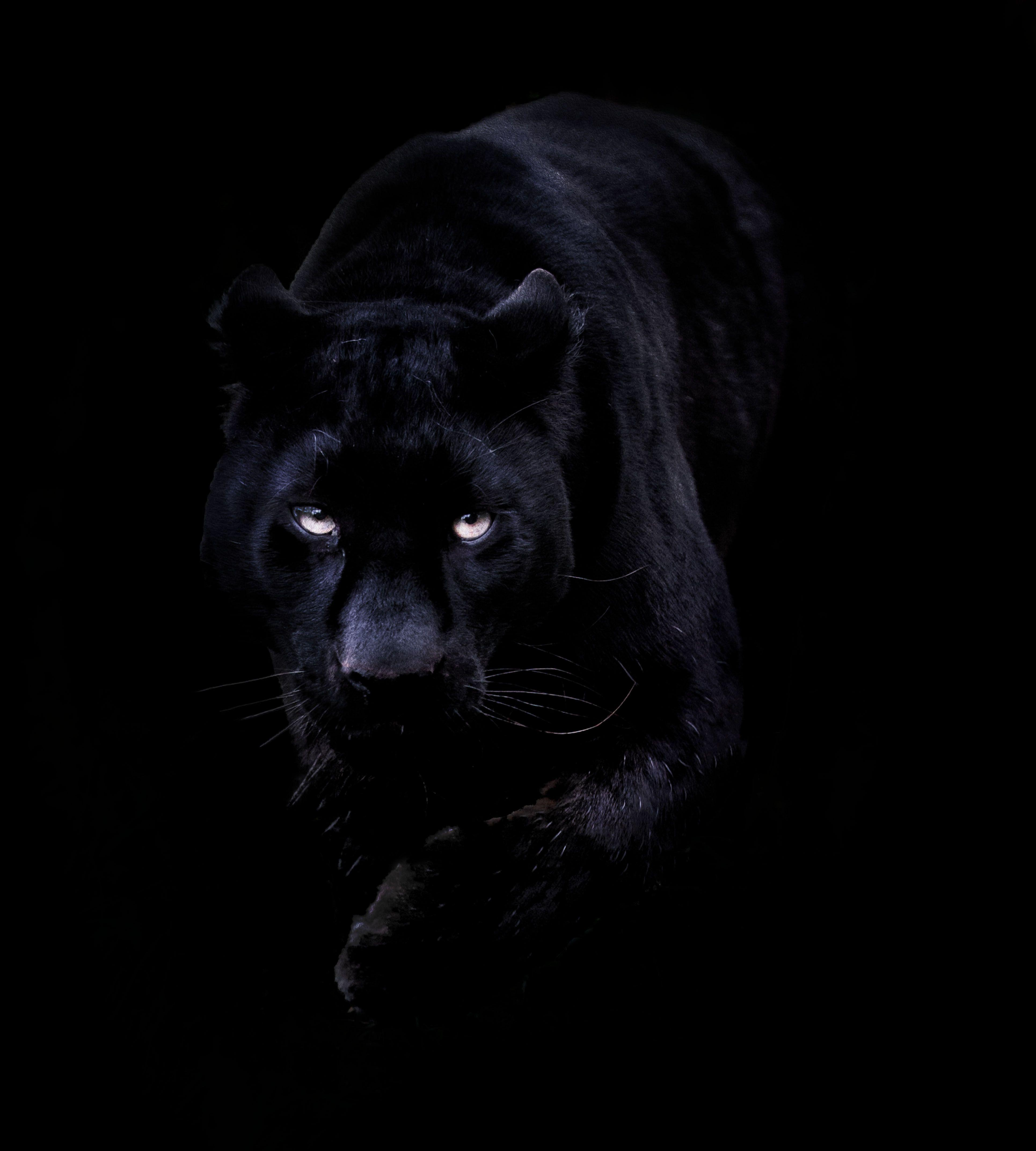 Black Panther Wallpapers - Wallpaper Cave