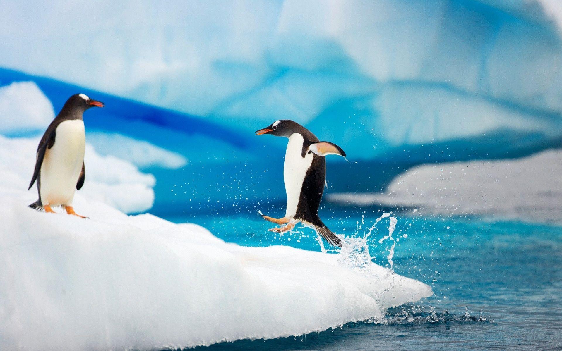 костянки к чему снятся пингвины много на льдинах эта