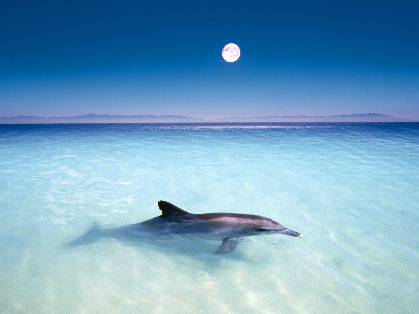 Free-Dolphin-Wallpaper- ...