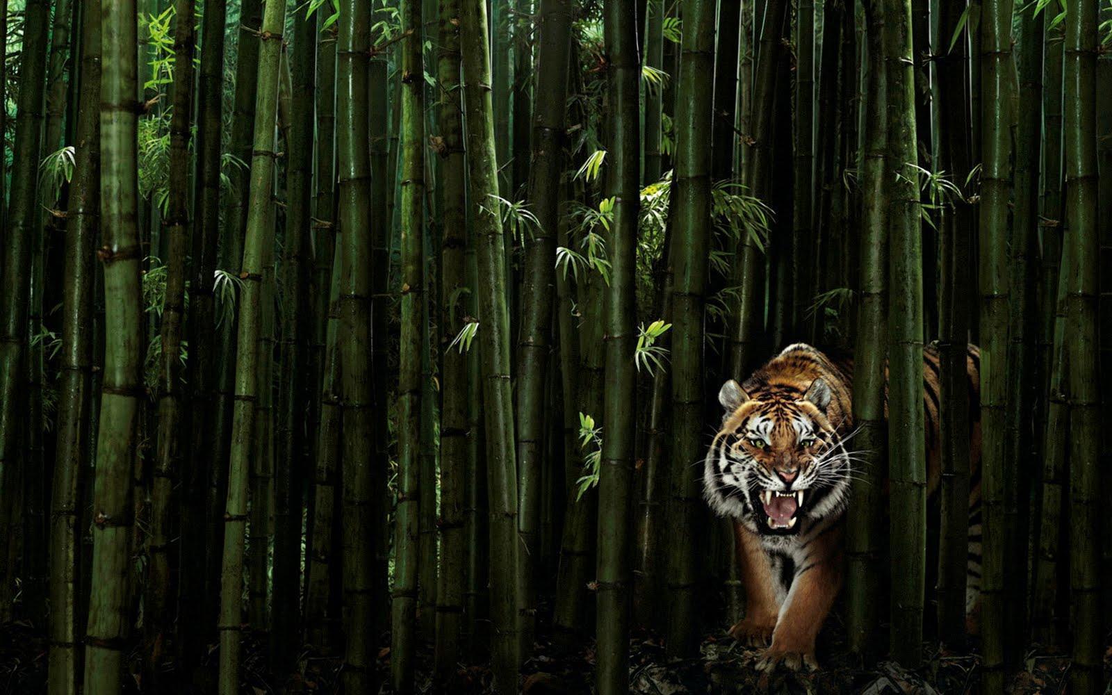 bamboo background nineteen photo - photo #27