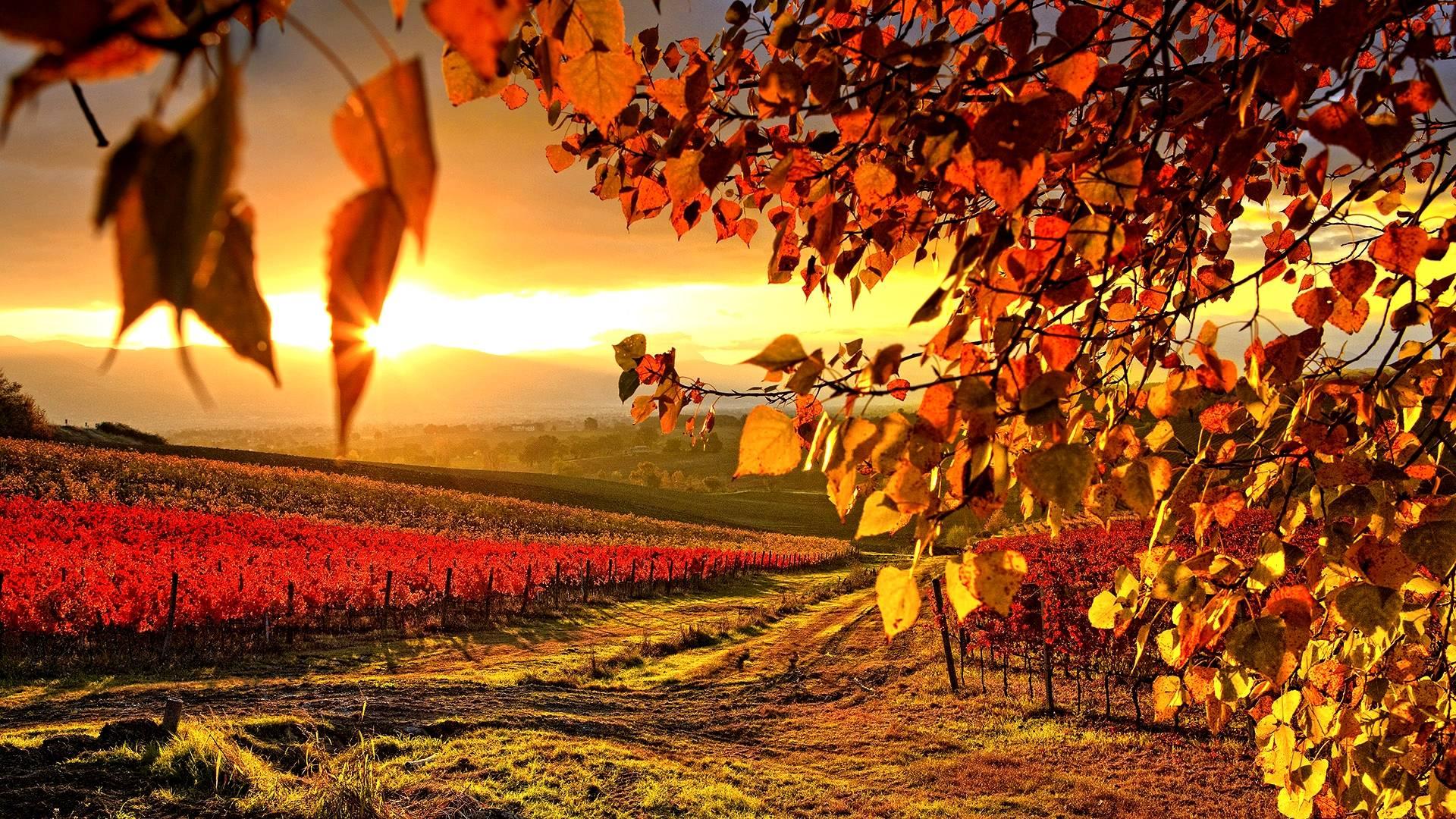 wallpapers for italian vineyard wallpaper