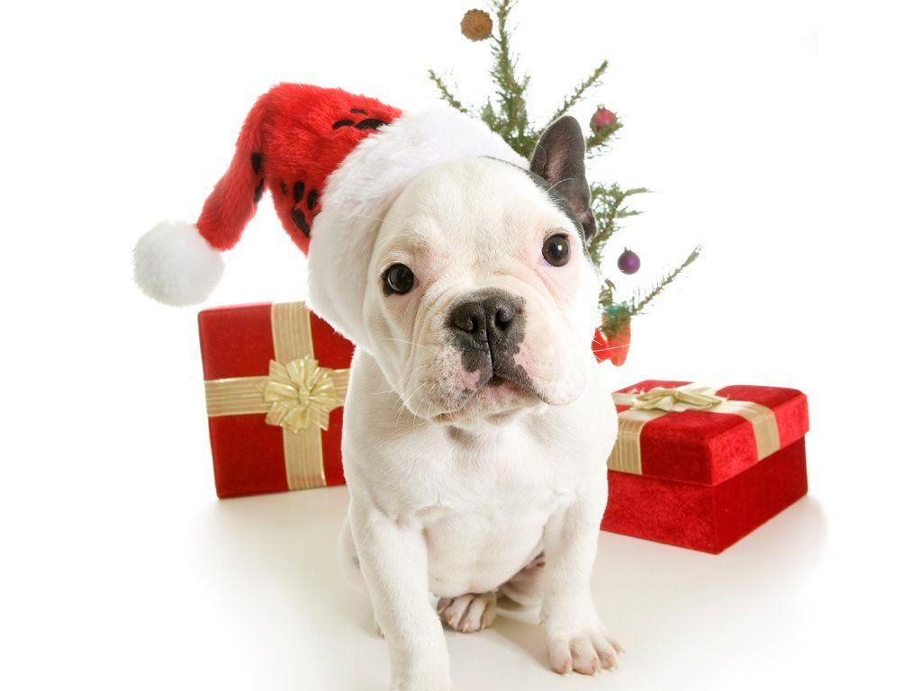 Puppy Christmas Wallpapers - Wallpaper Cave