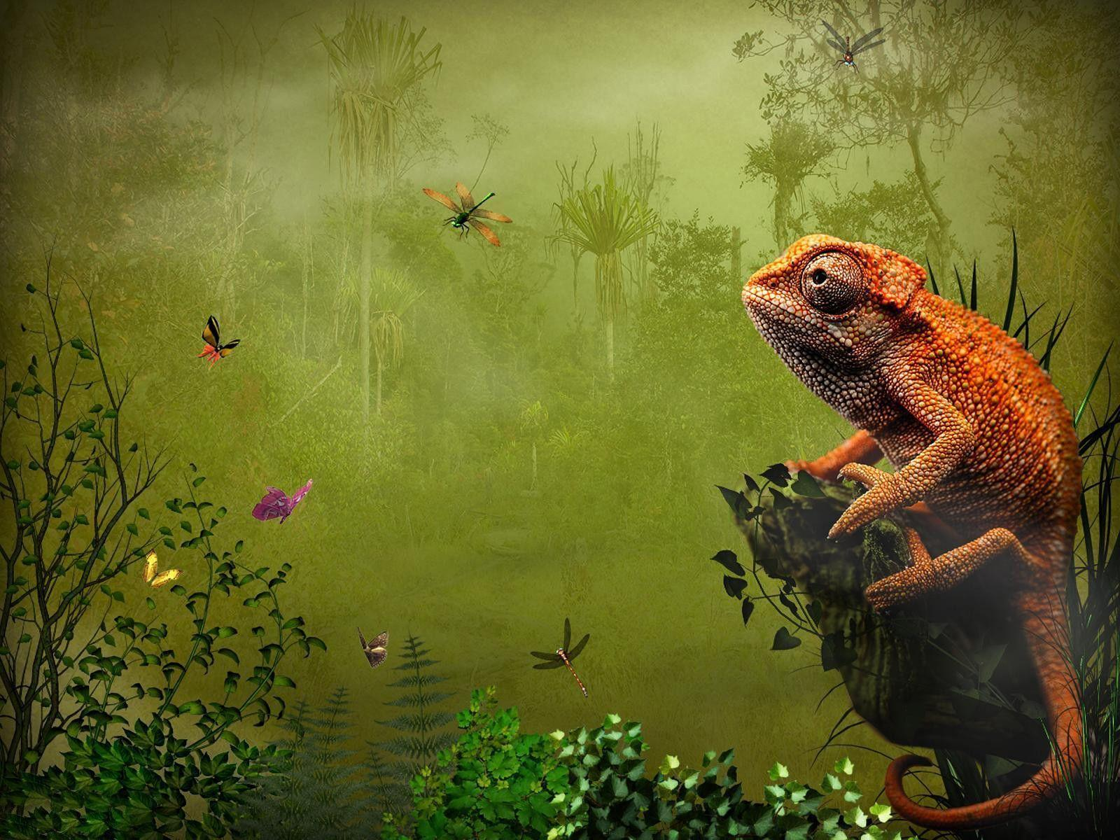 270 Lizard Wallpapers | Lizard Backgrounds Page 7
