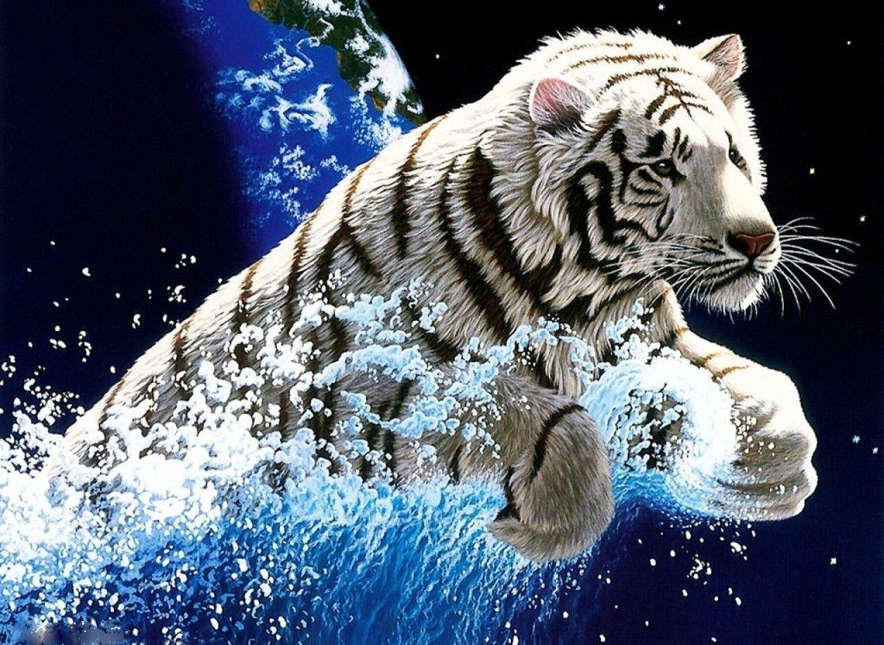 free white tiger wallpapers - wallpaper cave